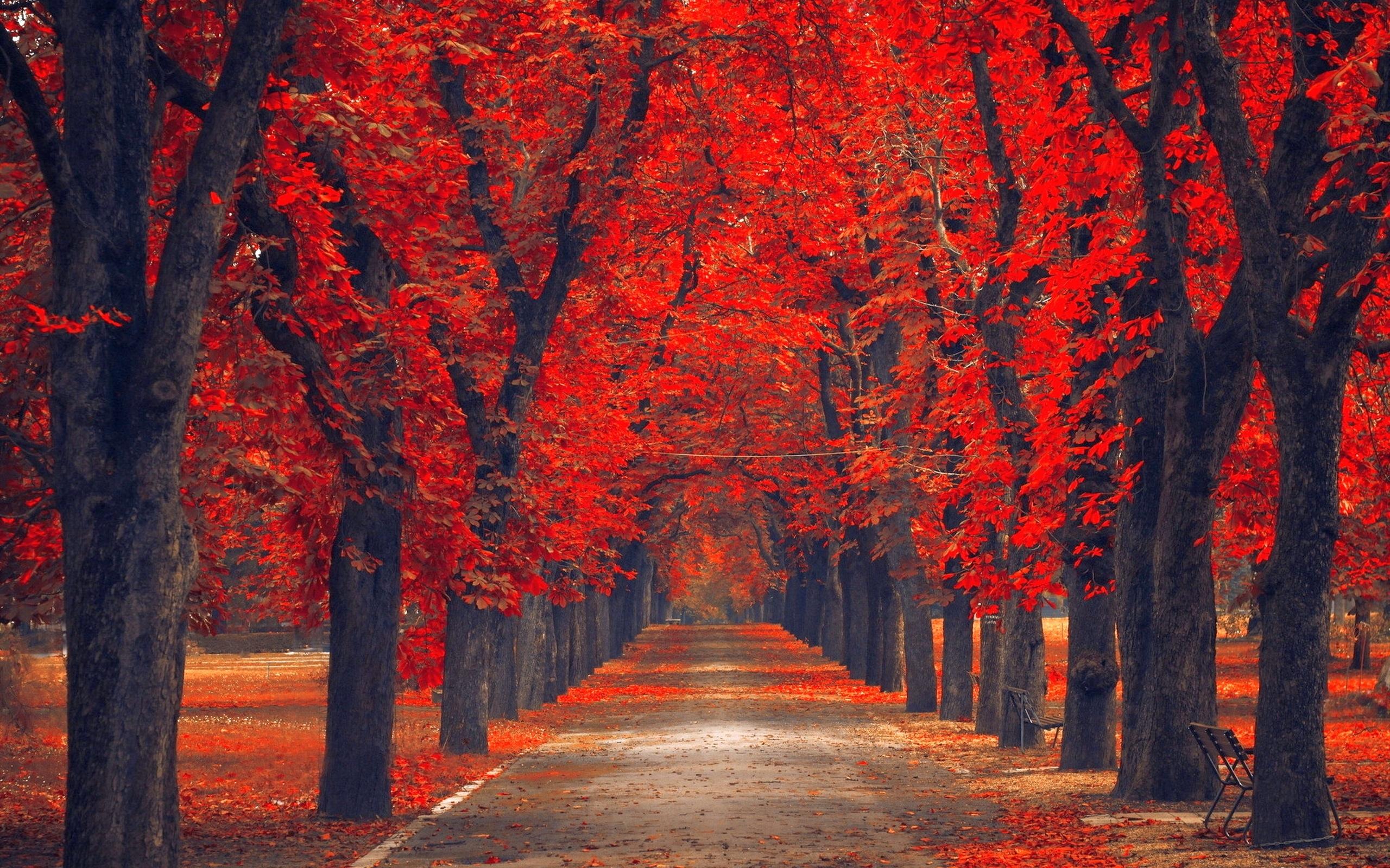 пара закат парк осень  № 1603168 бесплатно