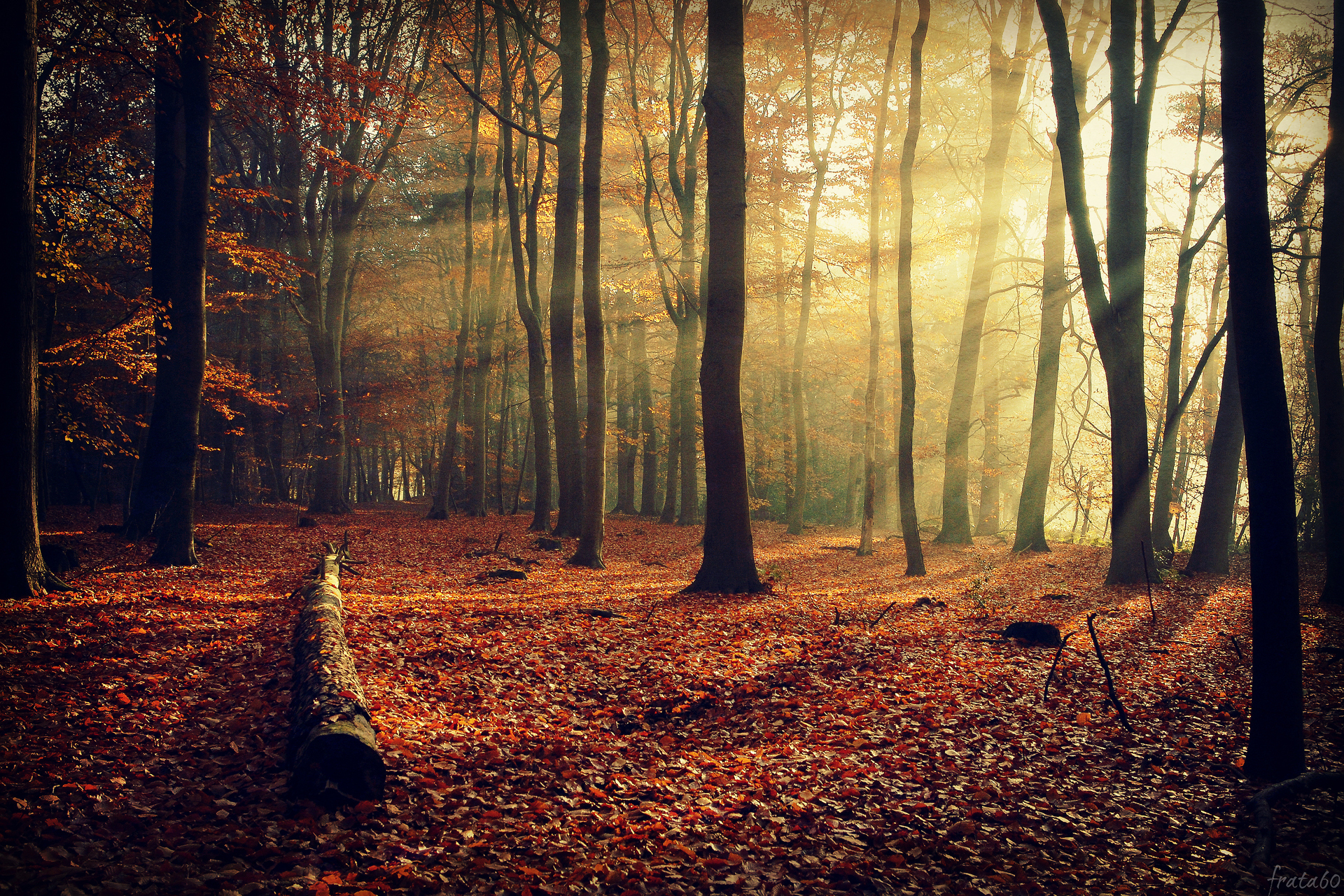 деревья листва осень солнце  № 3191783 без смс