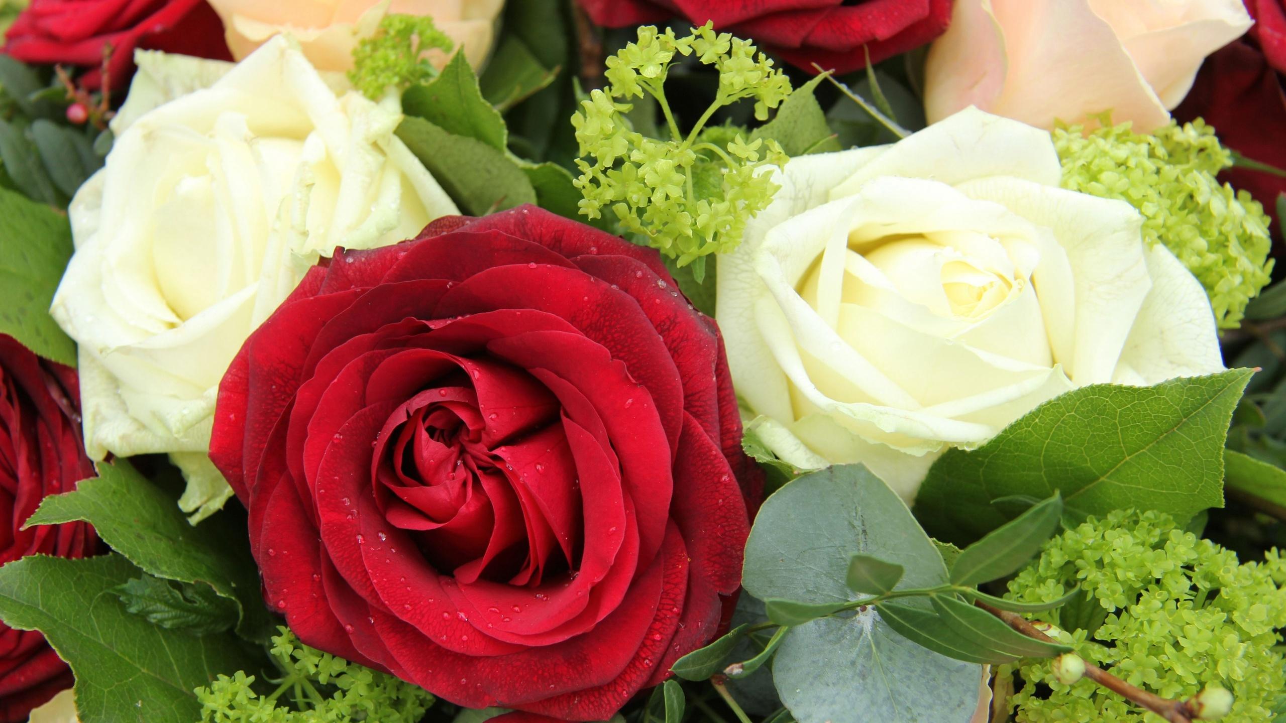 Открытку, розы открытка смотреть онлайн