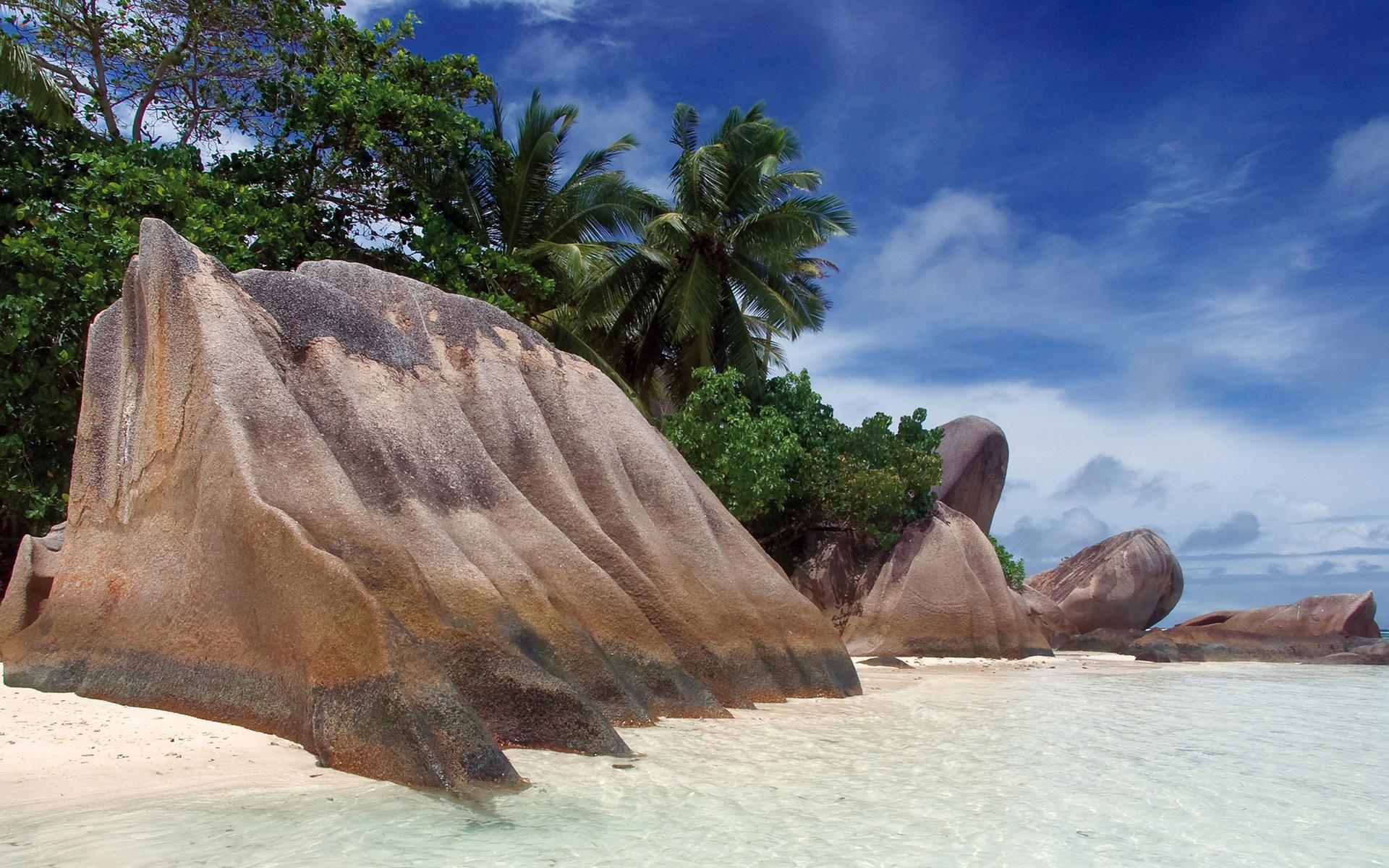 берег камни пальмы shore stones palm trees скачать