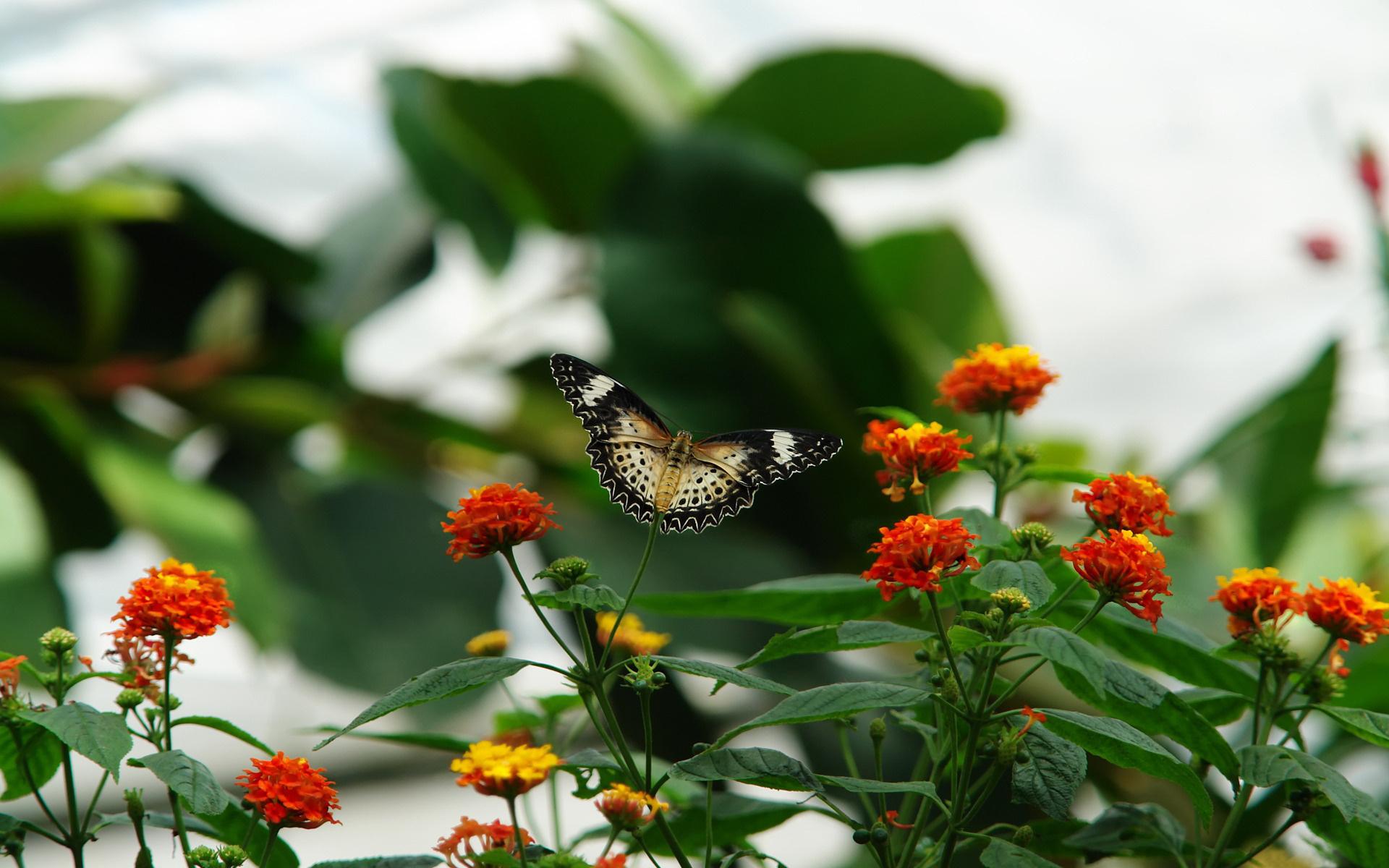 природа цветы листья  № 2053551  скачать