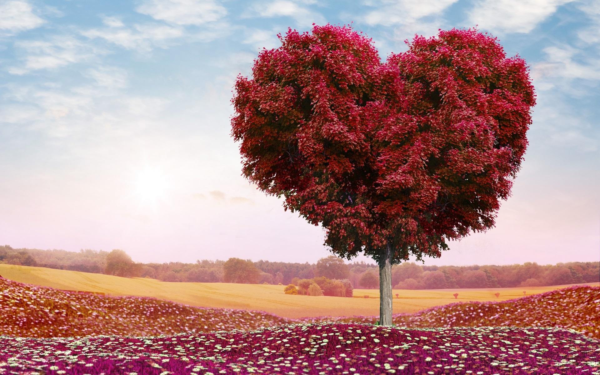Картинка природа любовь