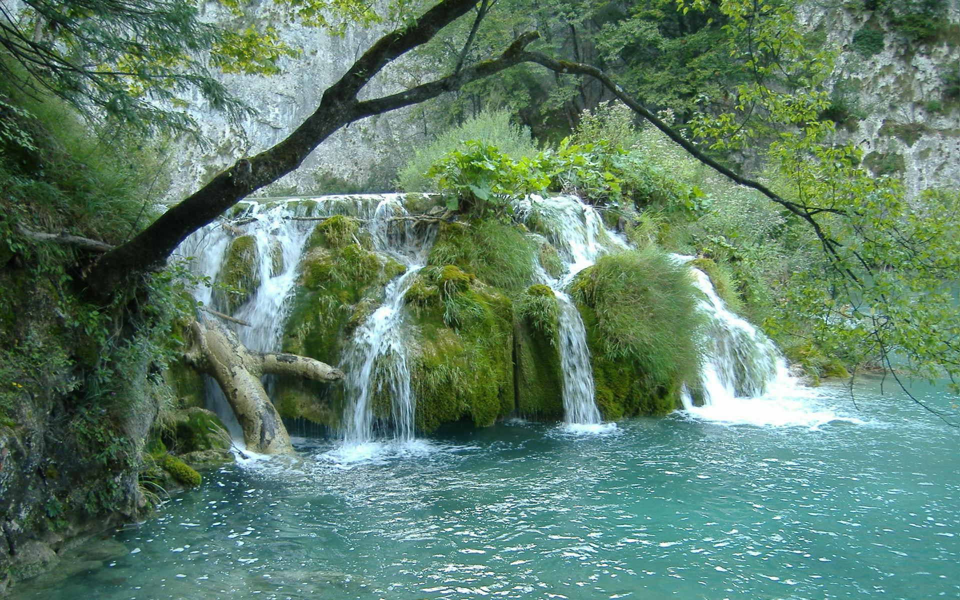 природа река водопад деревья загрузить