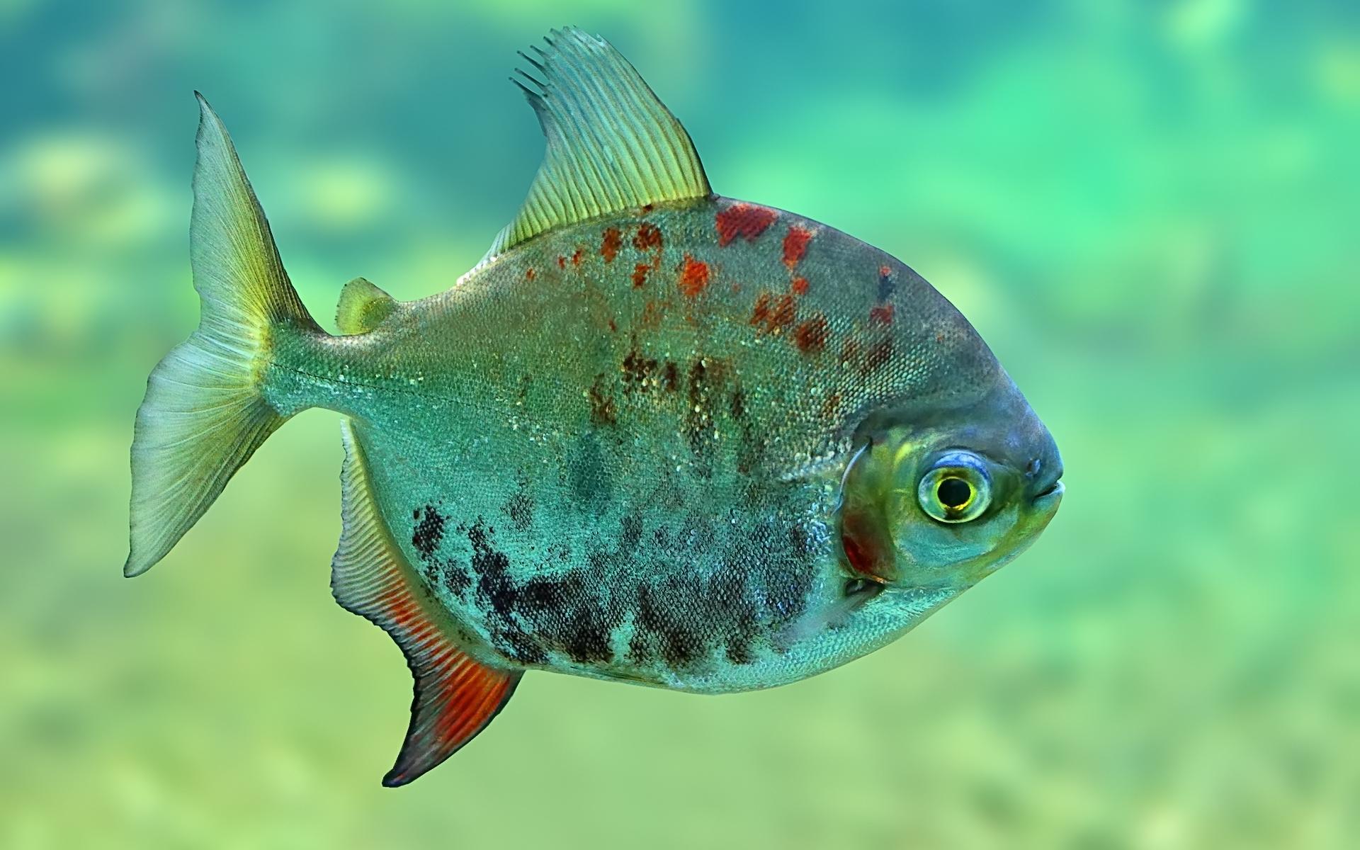 fish4u társkereső