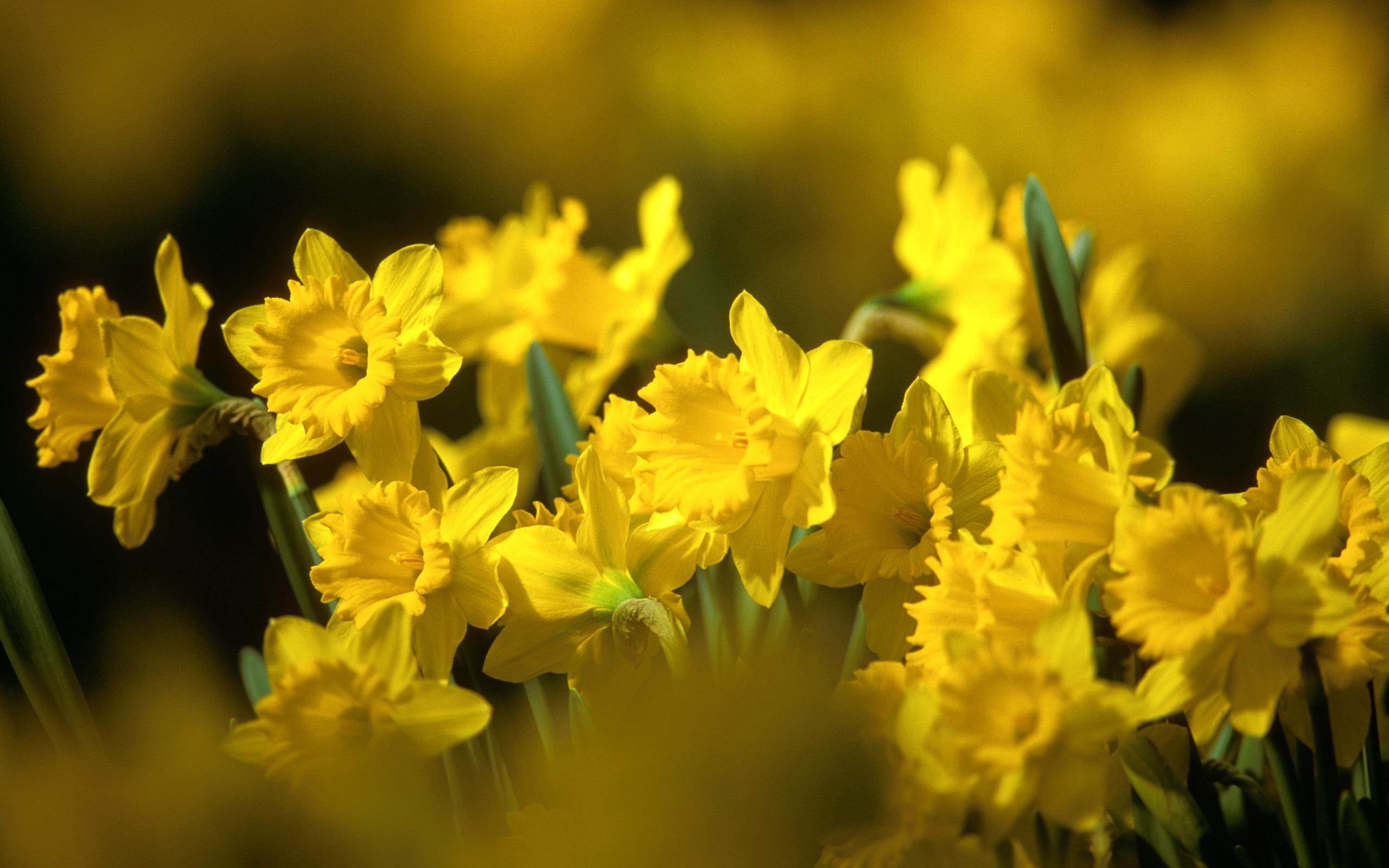 цветок желтый flower yellow  № 1246535 загрузить