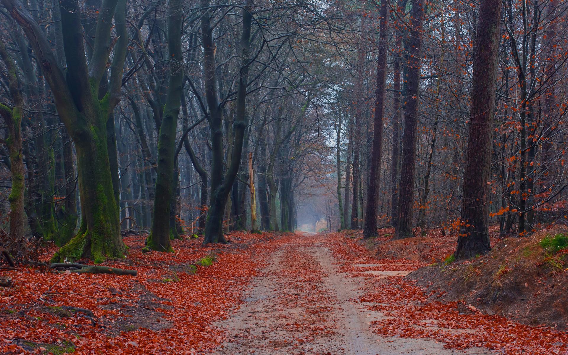Осень листва лес  № 3162828  скачать