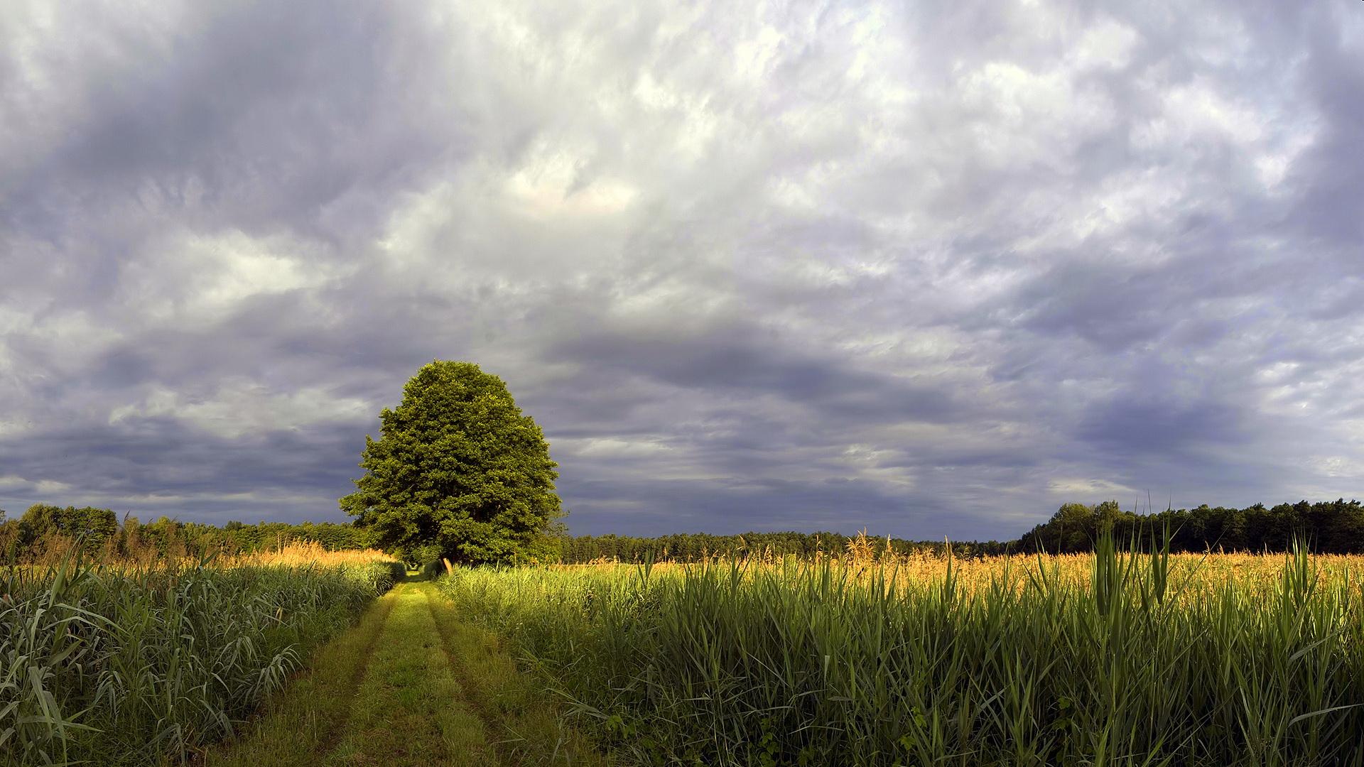 природа горизонт деревья вечер бесплатно