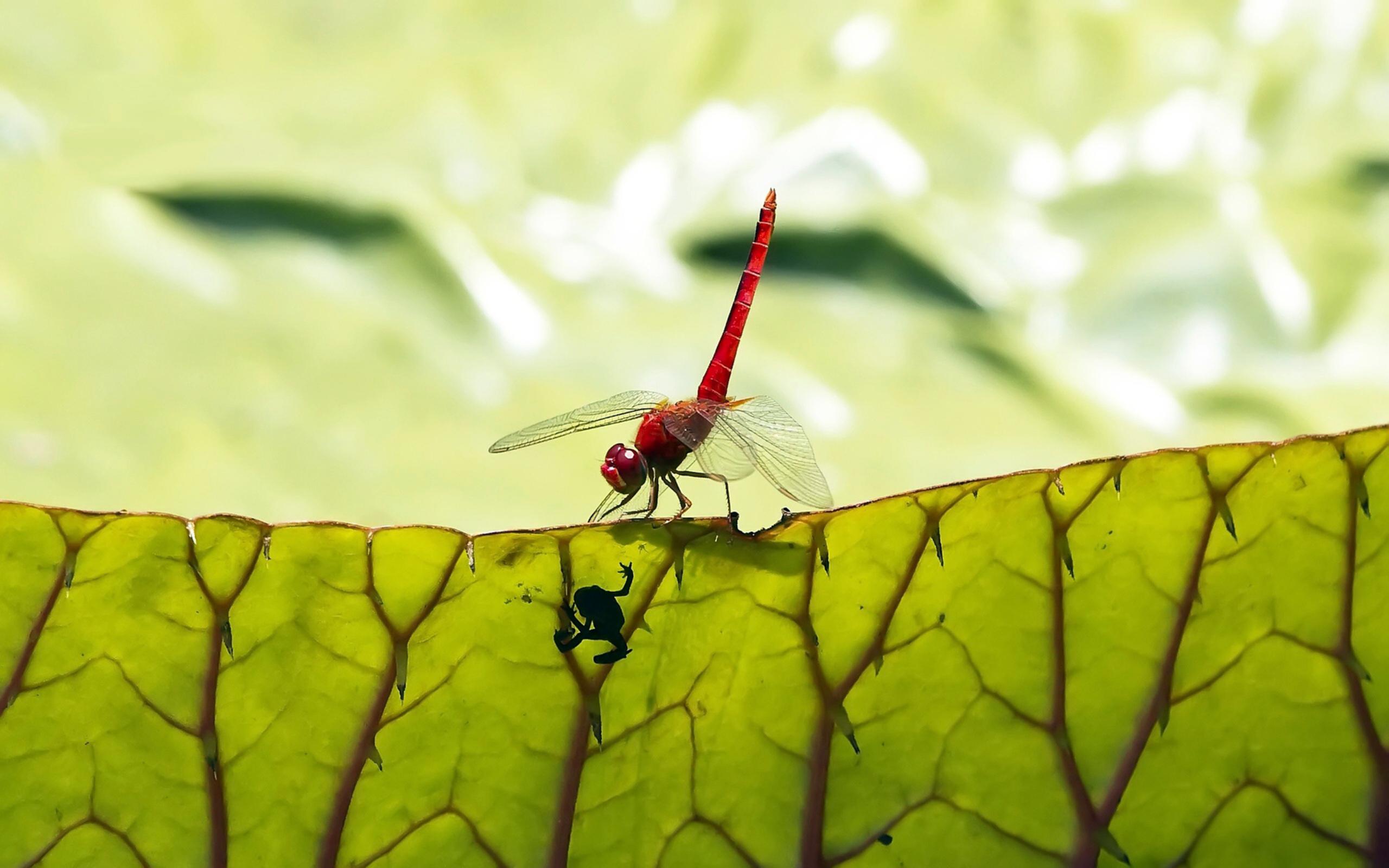природа макро животные насекомое стрекоза  № 2748010 бесплатно