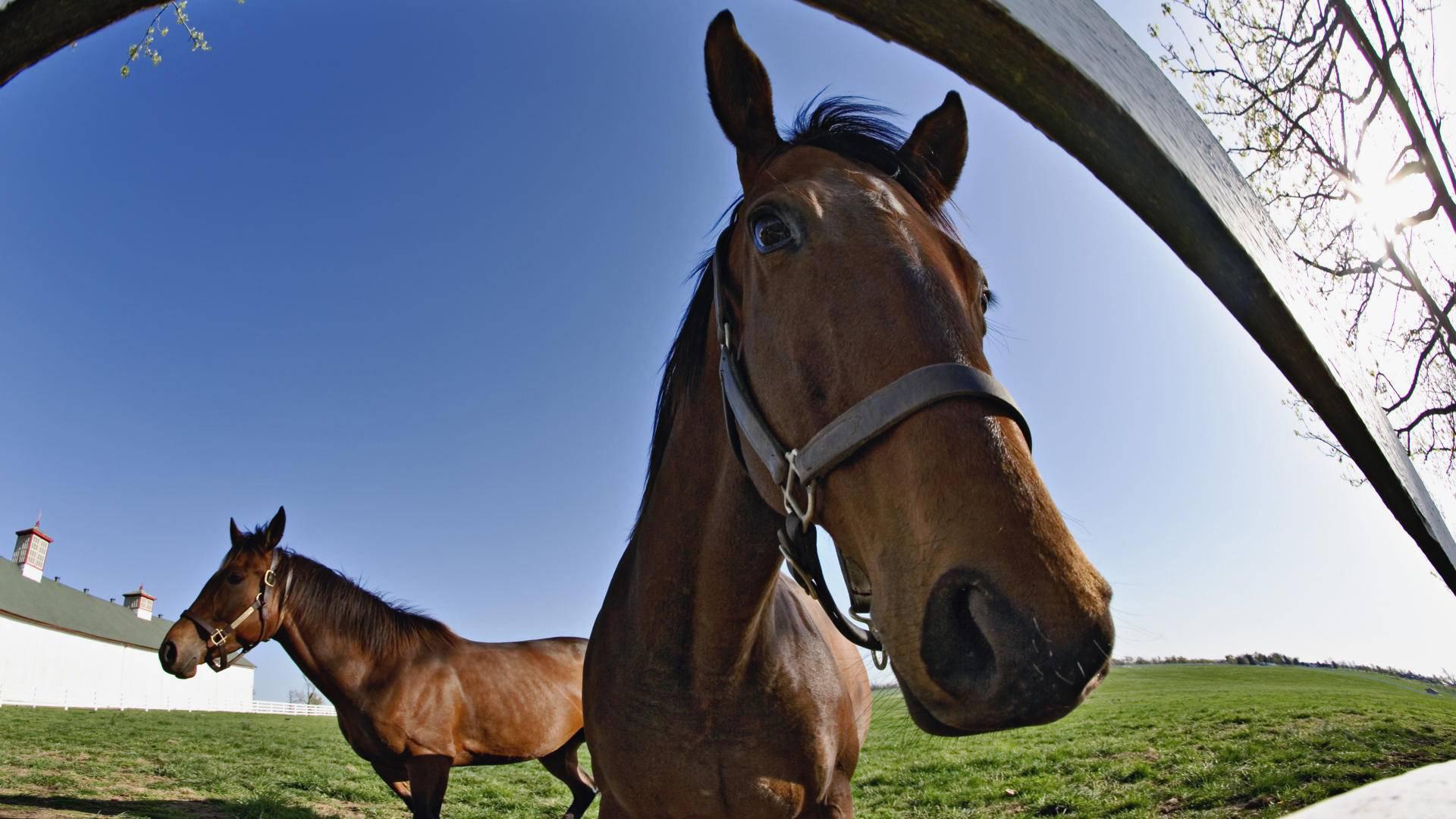 Открытки, прикольные картинки про коней