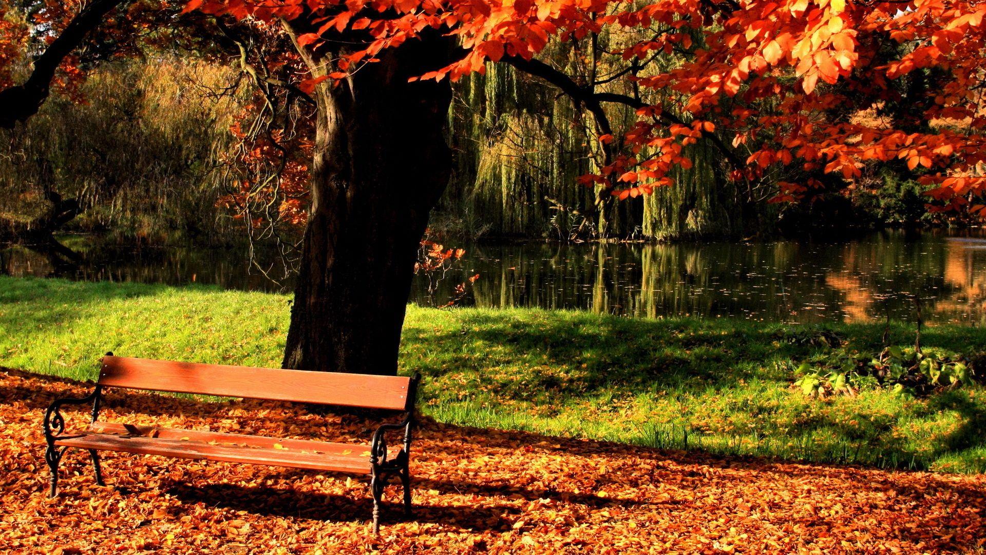 озеро скамейка парк the lake bench Park загрузить