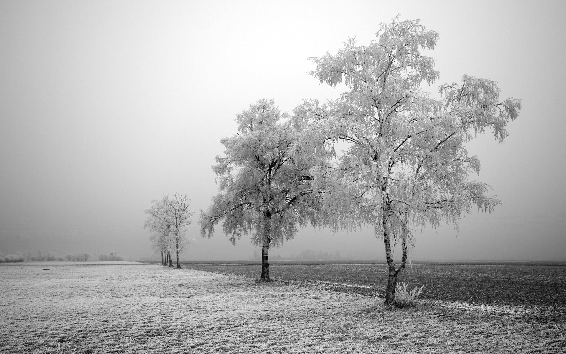 Снег деревья поле загрузить