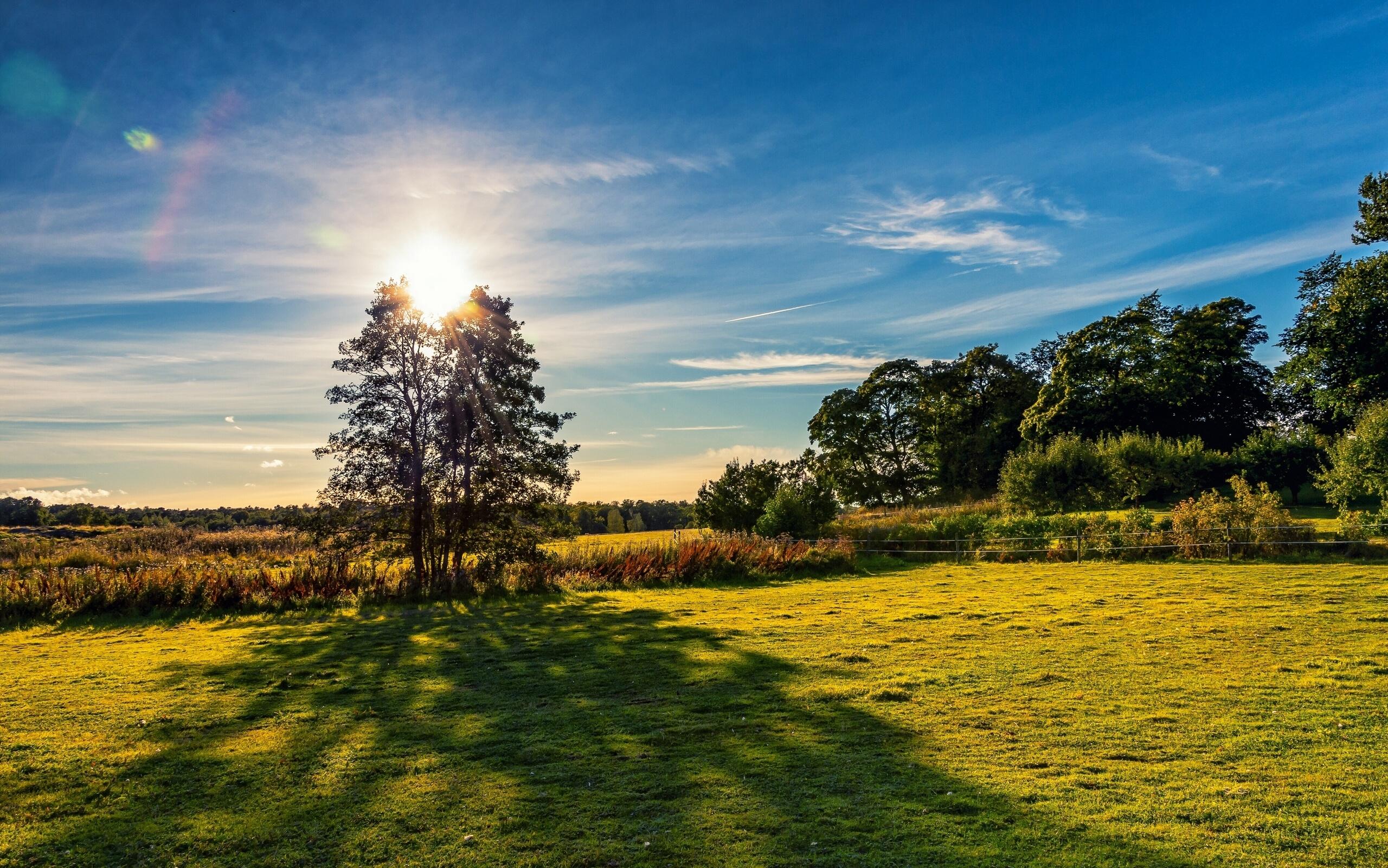 солнце лужайка березы  № 2741899 загрузить