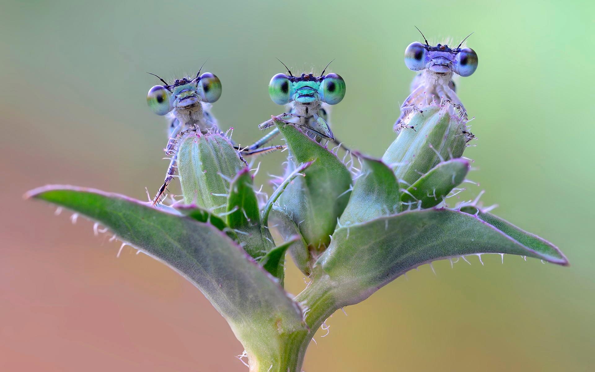 Классные открытки, смешные картинки насекомое