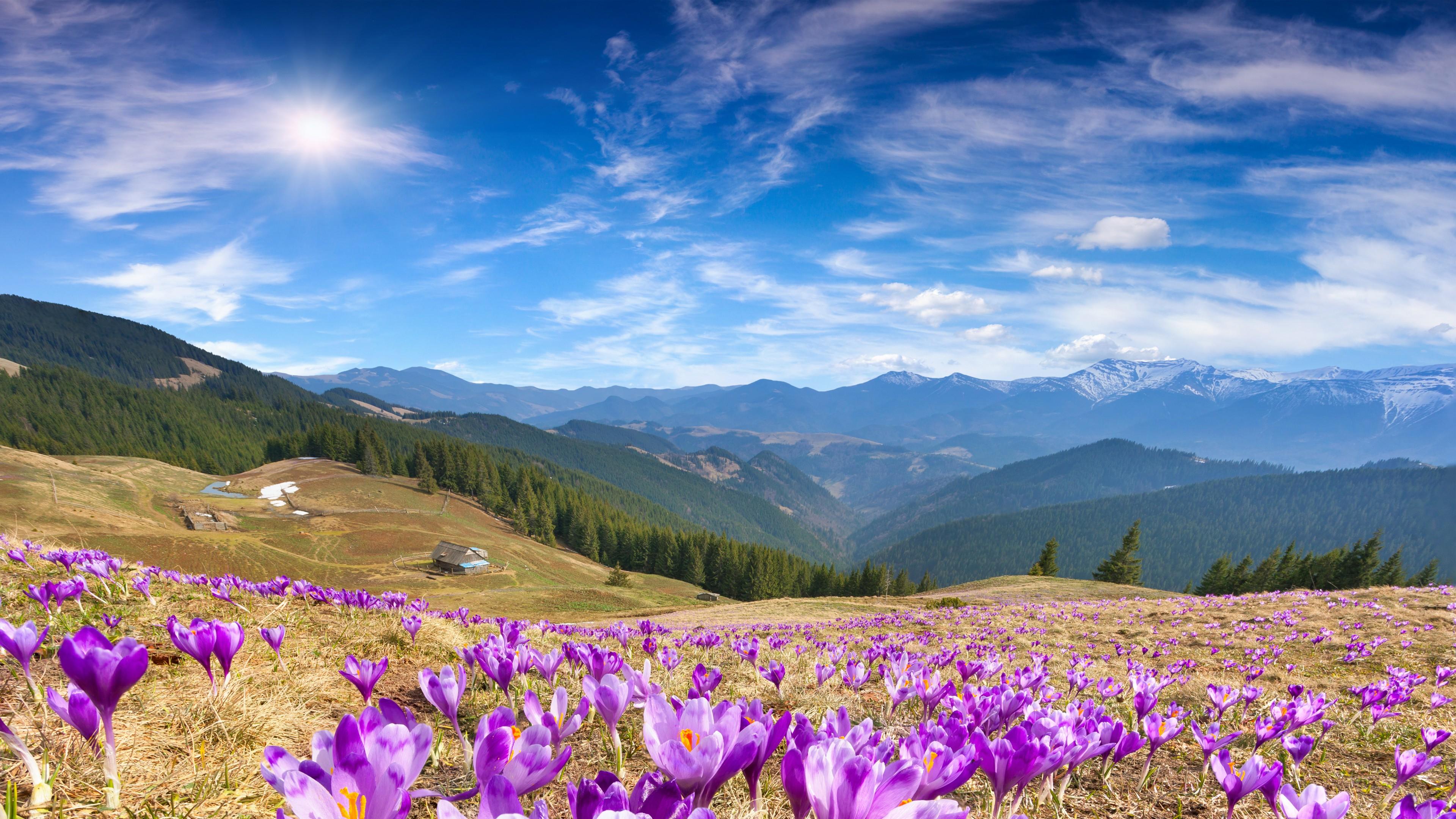 Картинки цветы в горах на рабочий стол