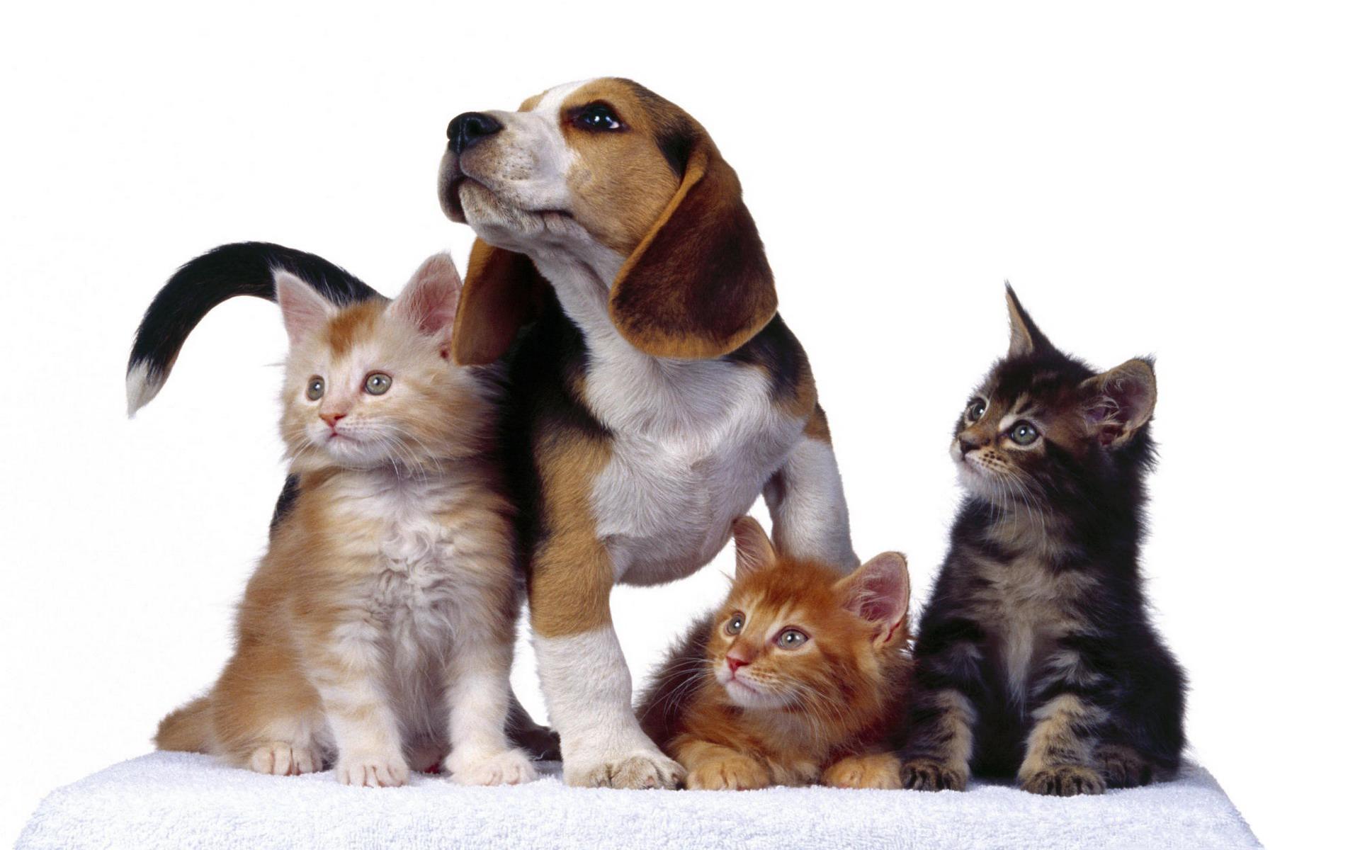 Картинка собаки и кошки, открытка марта