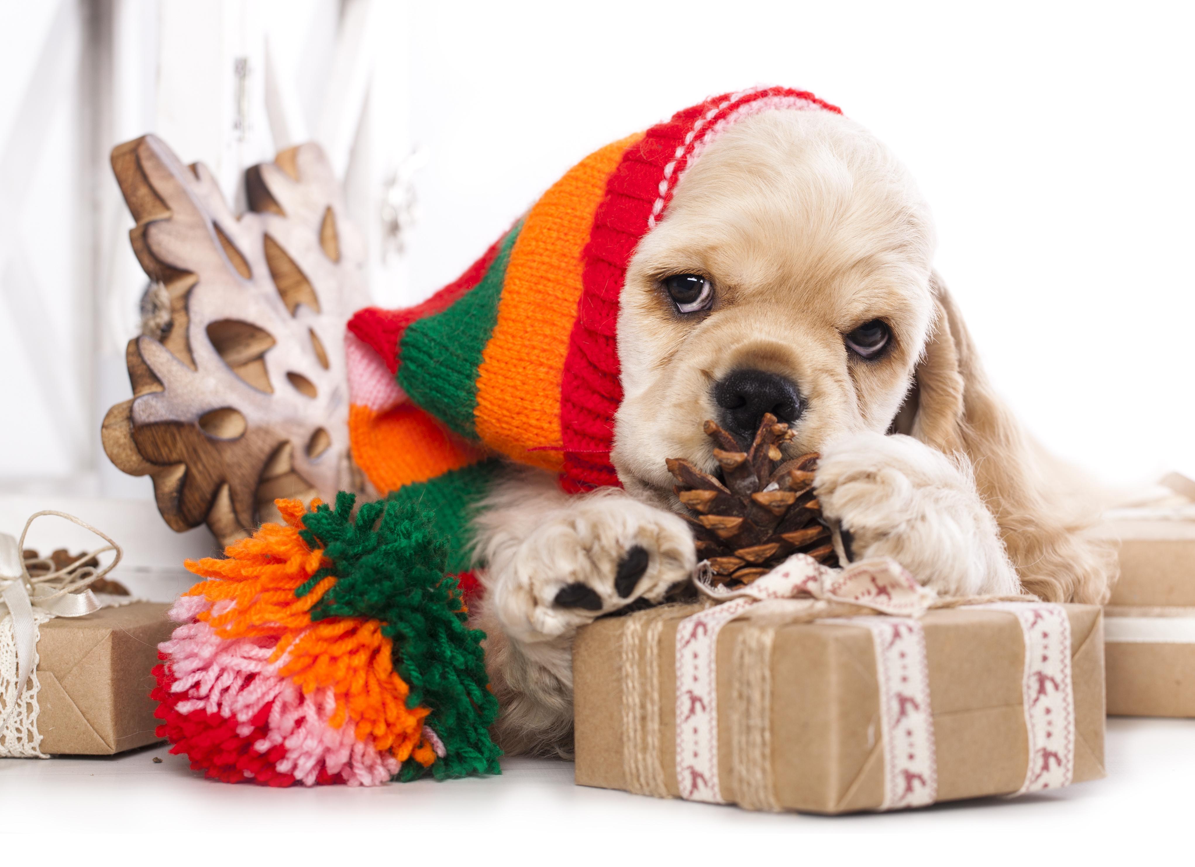 собака пакет сумка  № 1143337 бесплатно