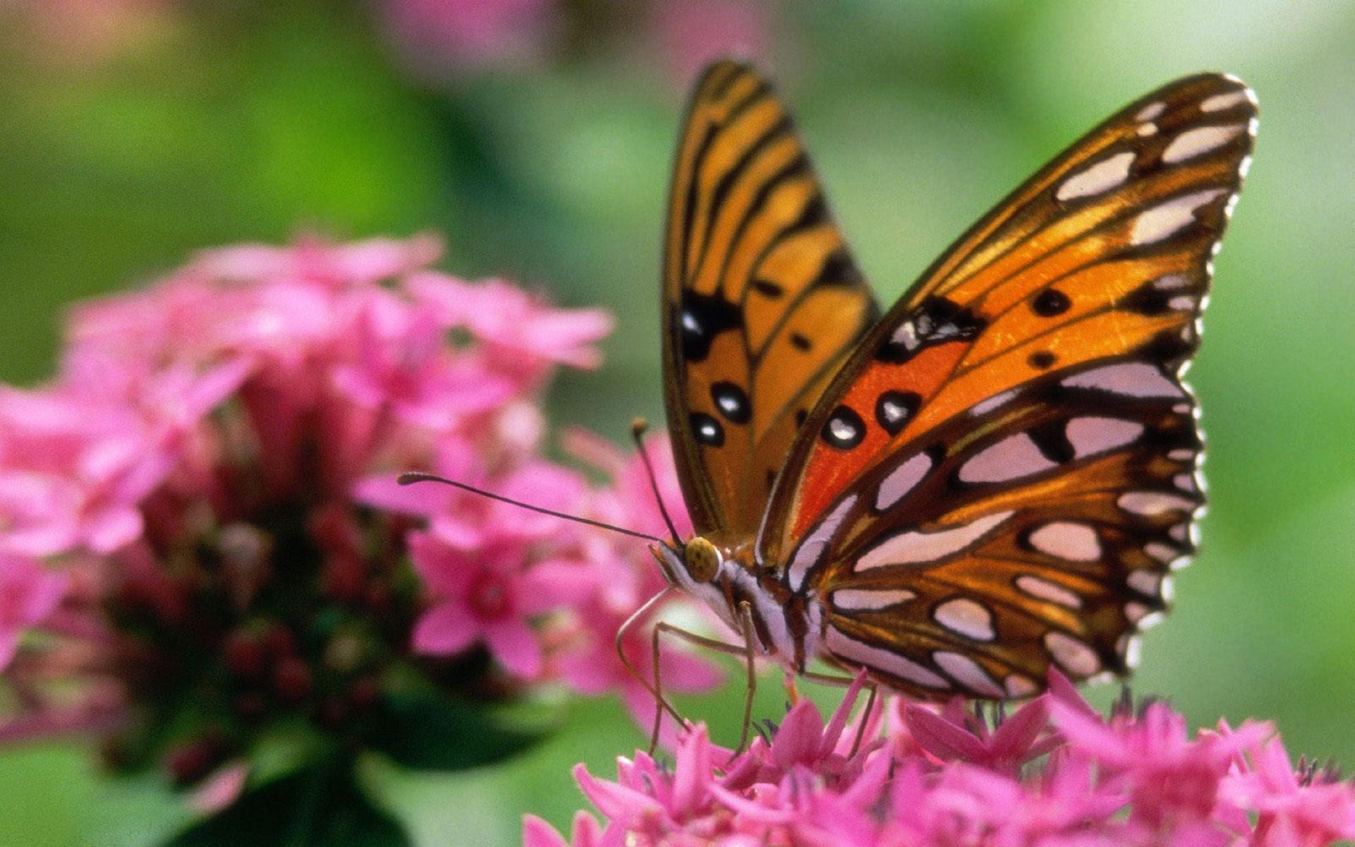 природа животные бабочка цветы скачать