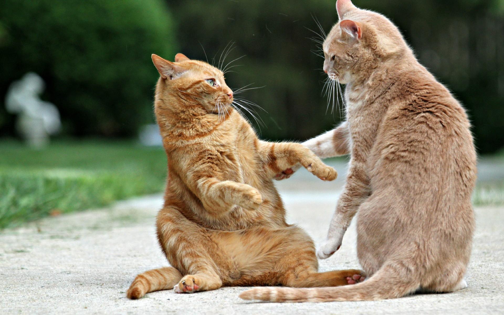 Смешные картинки про животных кошки, сердце