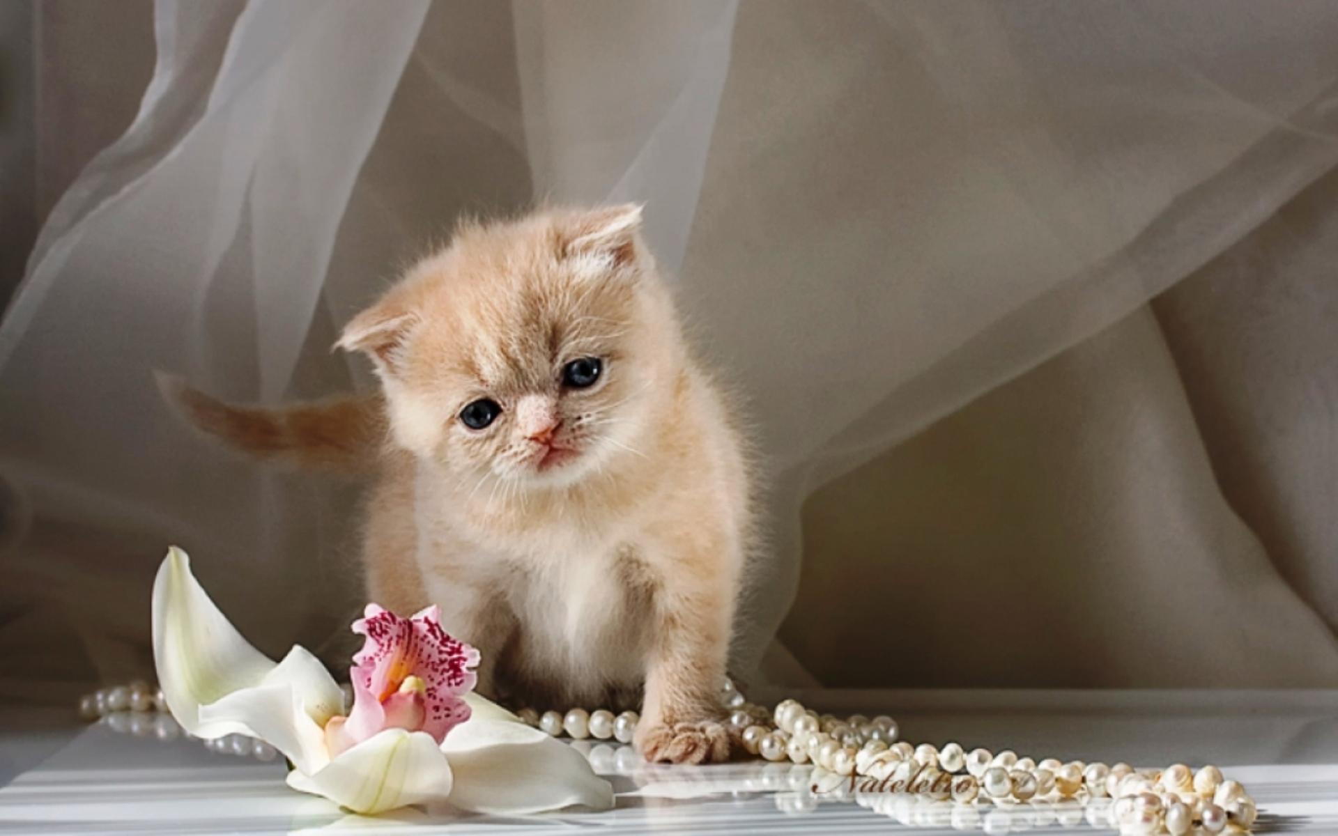 открытки с самыми красивыми котятами предлагают готовые изделия