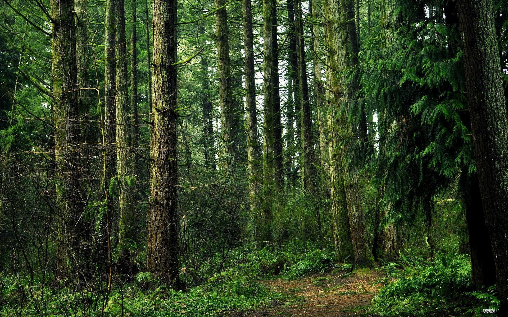 Картинка с лесом для фотошопа