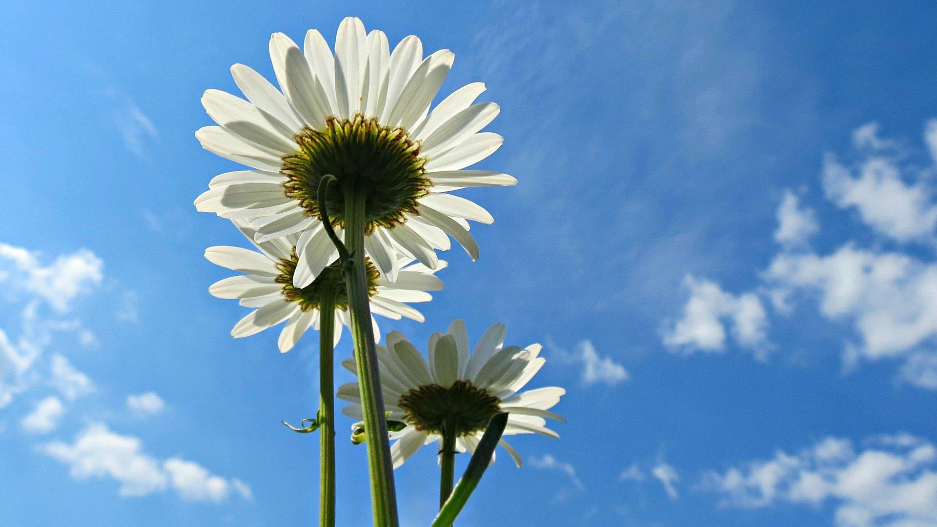 Картинки цветы на фоне неба, дочке днем рождения