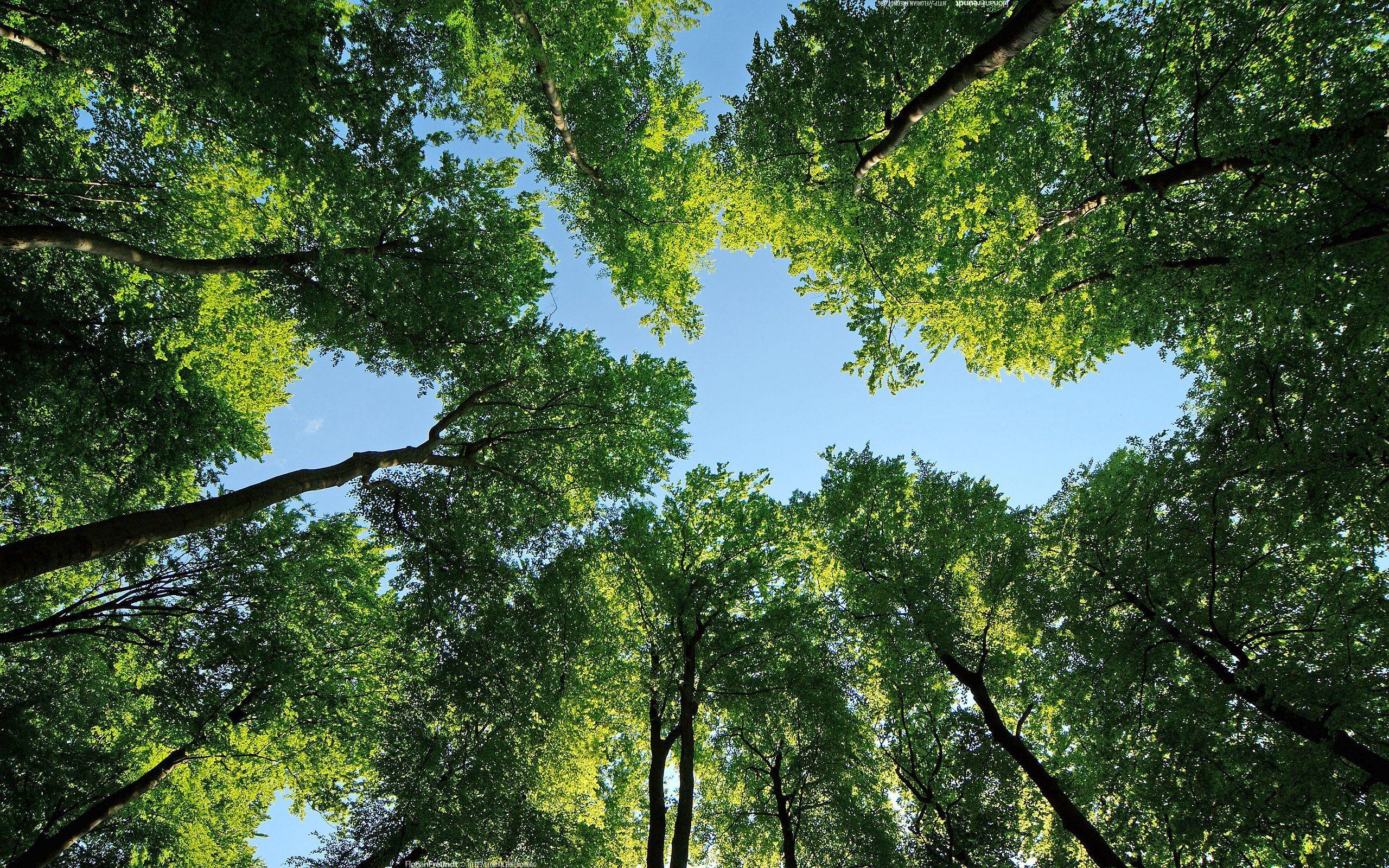 звезды лес кроны без смс