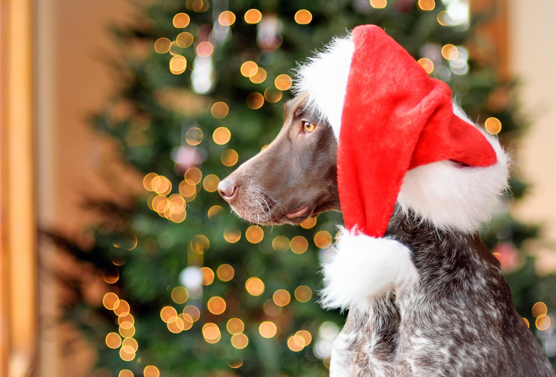 Новогодние картинки с собаками