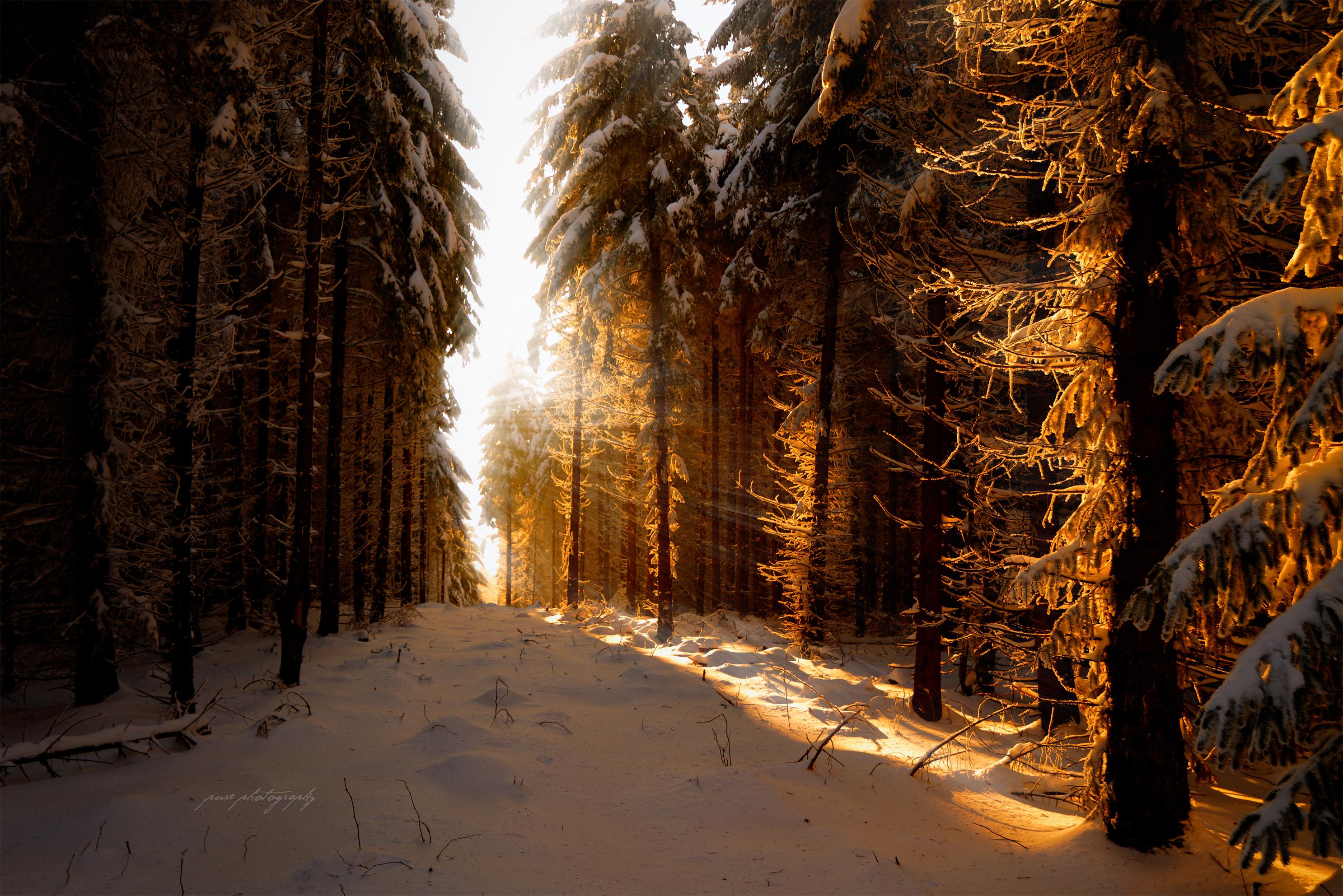 снег зима лучи деревья snow winter rays trees загрузить