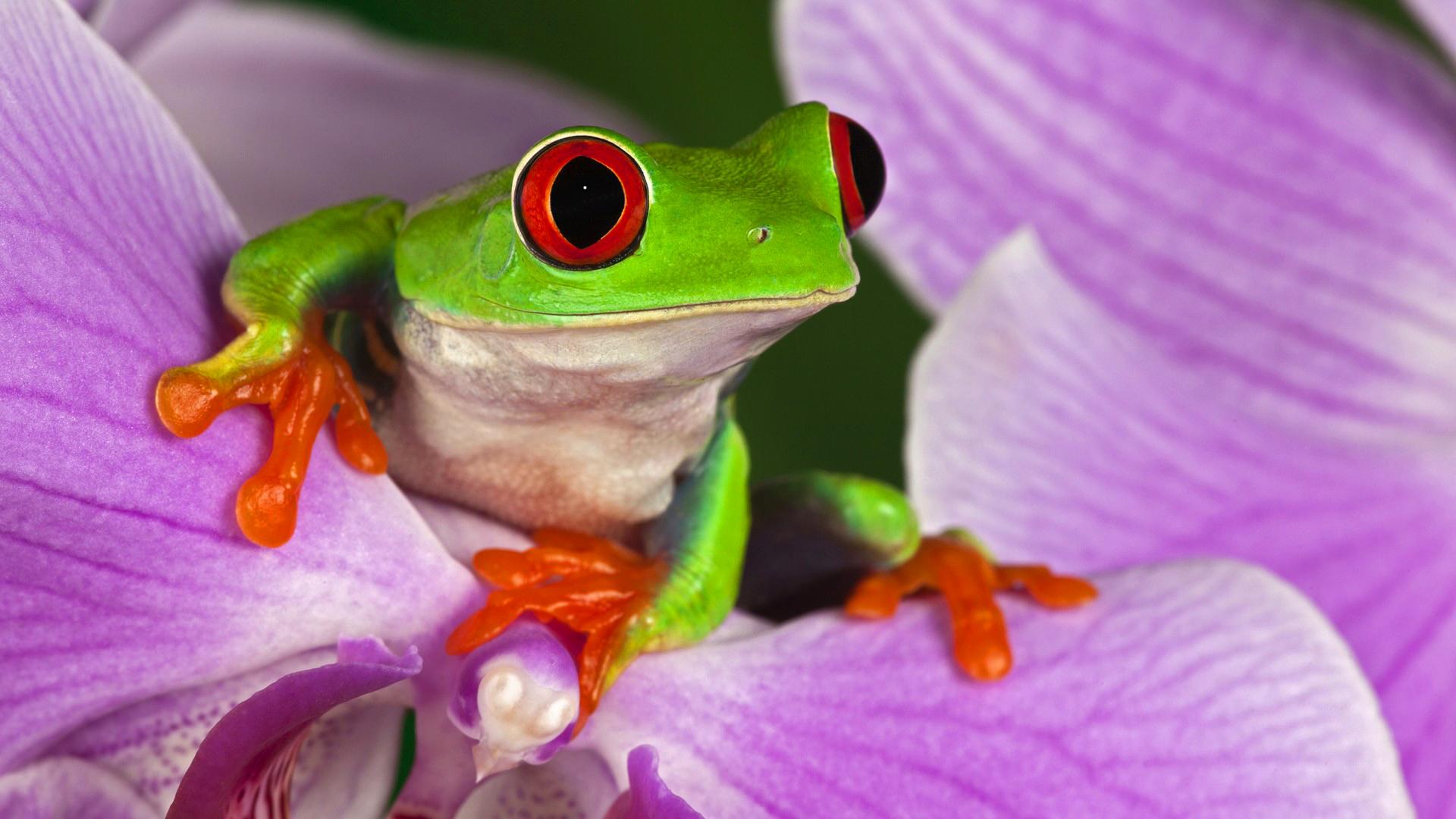 Днем, красивые лягушки открытки