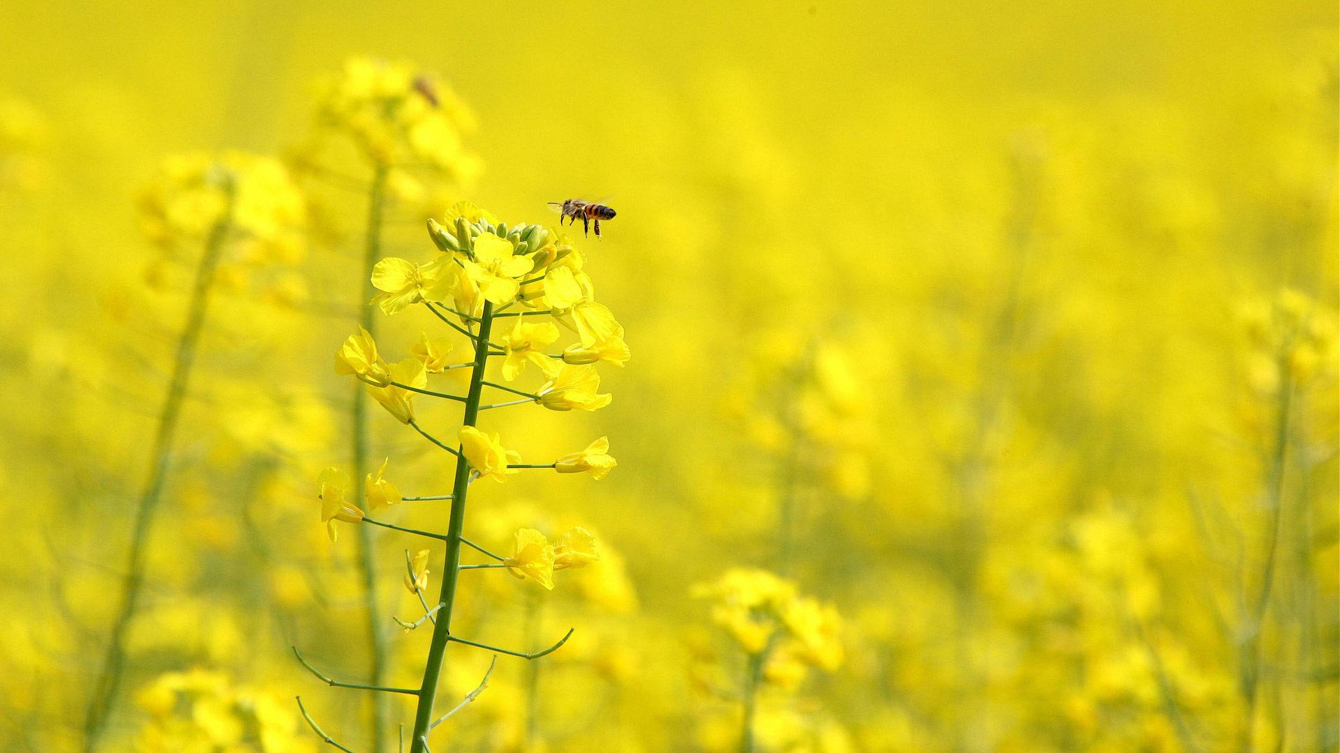 Желтый цветок  № 671035 без смс