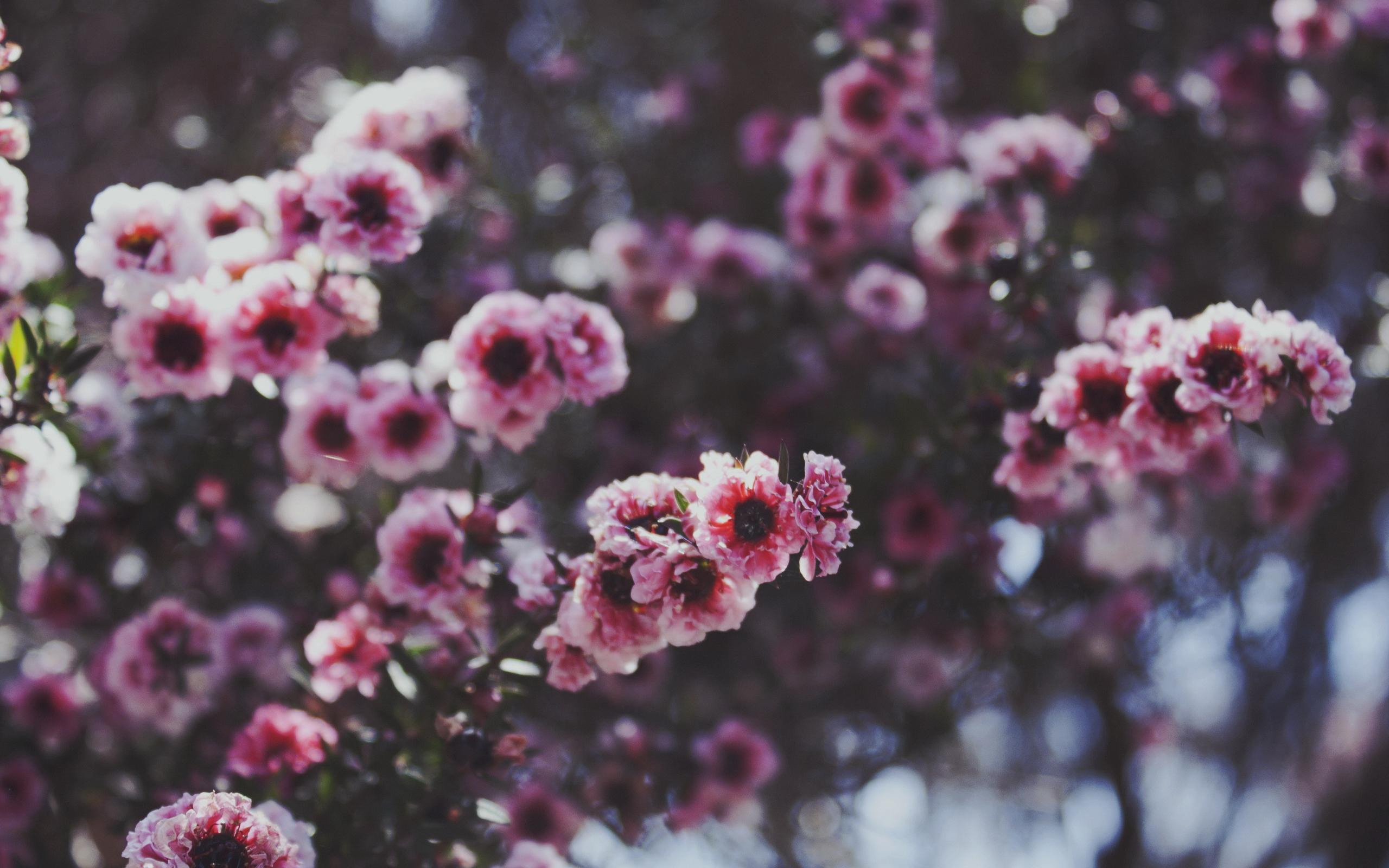 картинки для аска на фон цветы себя