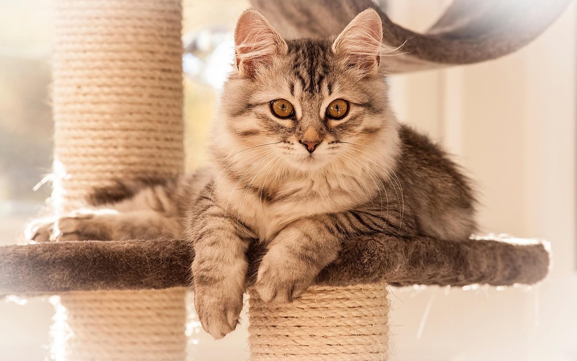 упитанный кот лапки  № 2866506  скачать