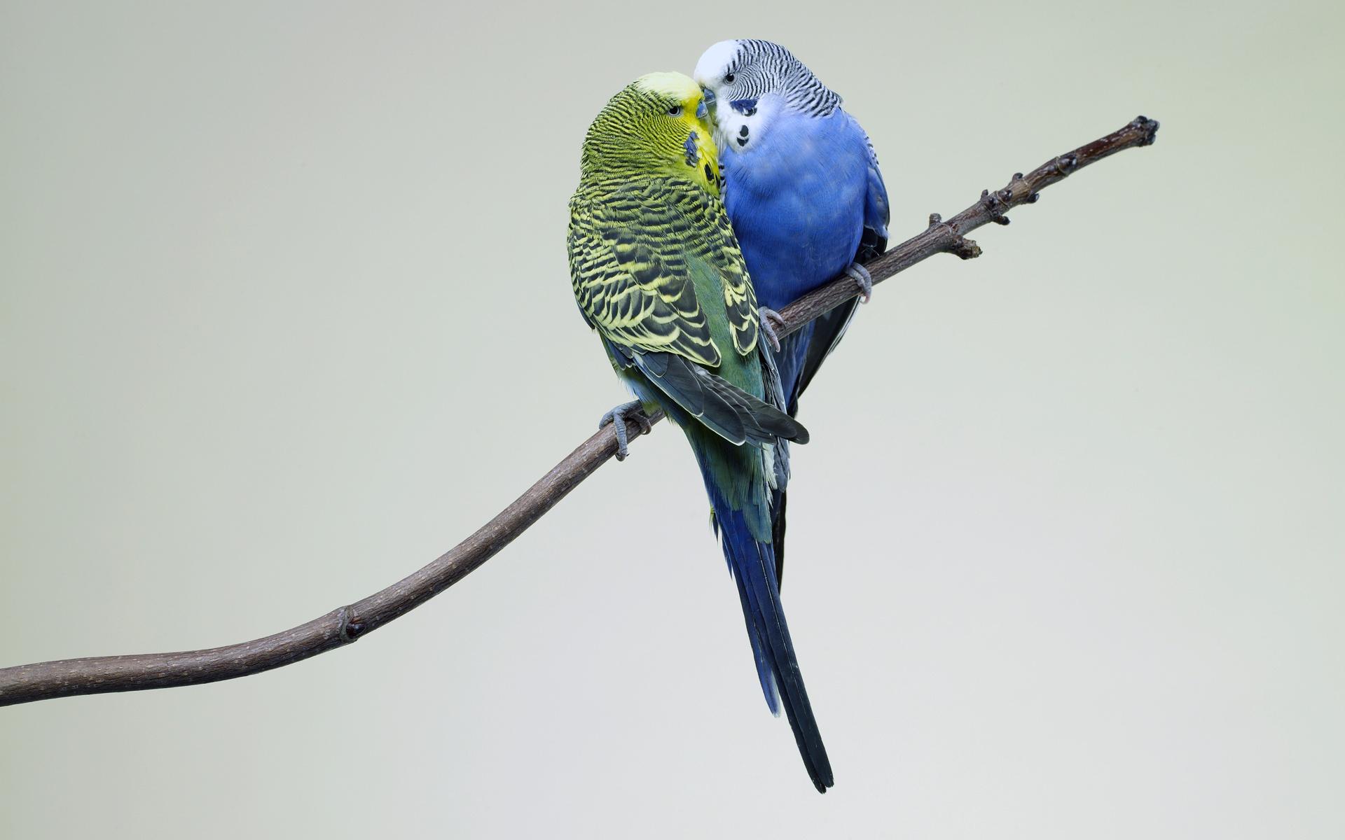 попугай макро деревья  № 737642  скачать