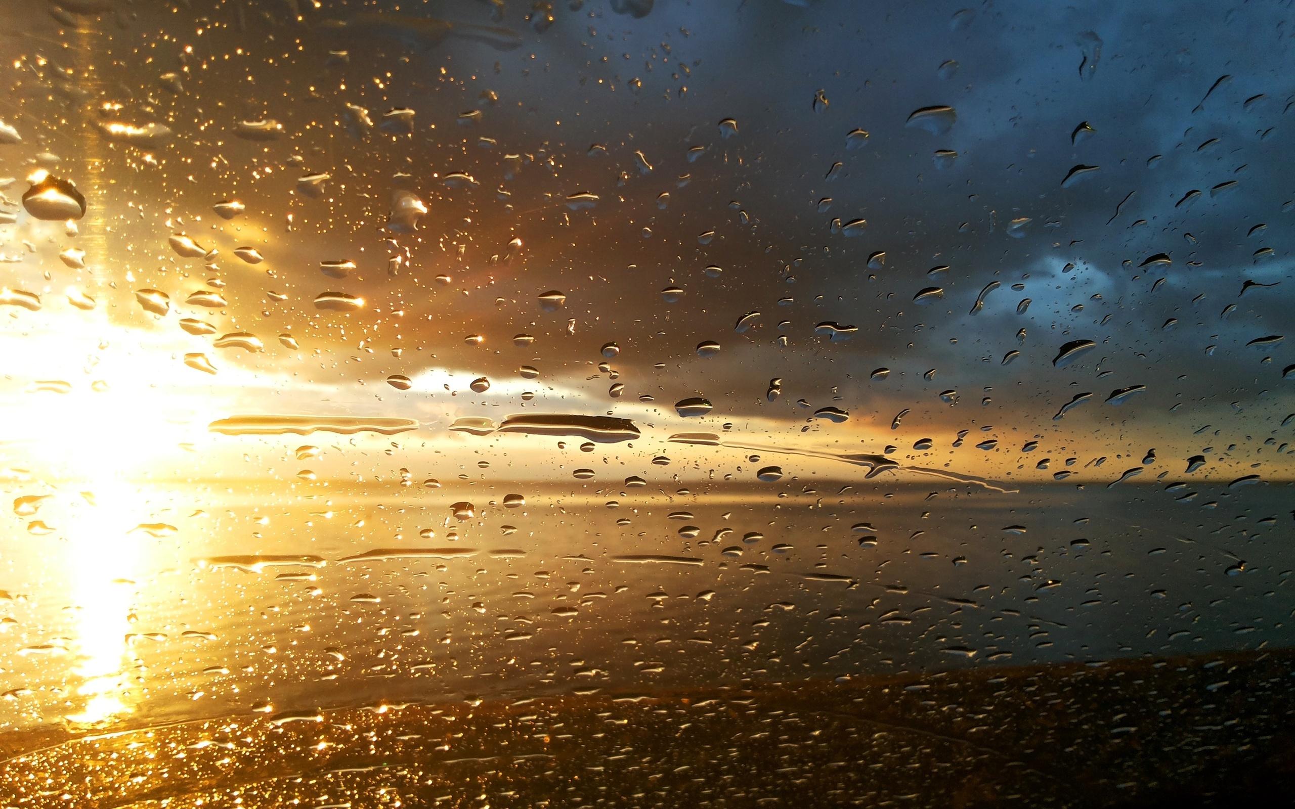 И дождь и солнце открытки, гифки животными