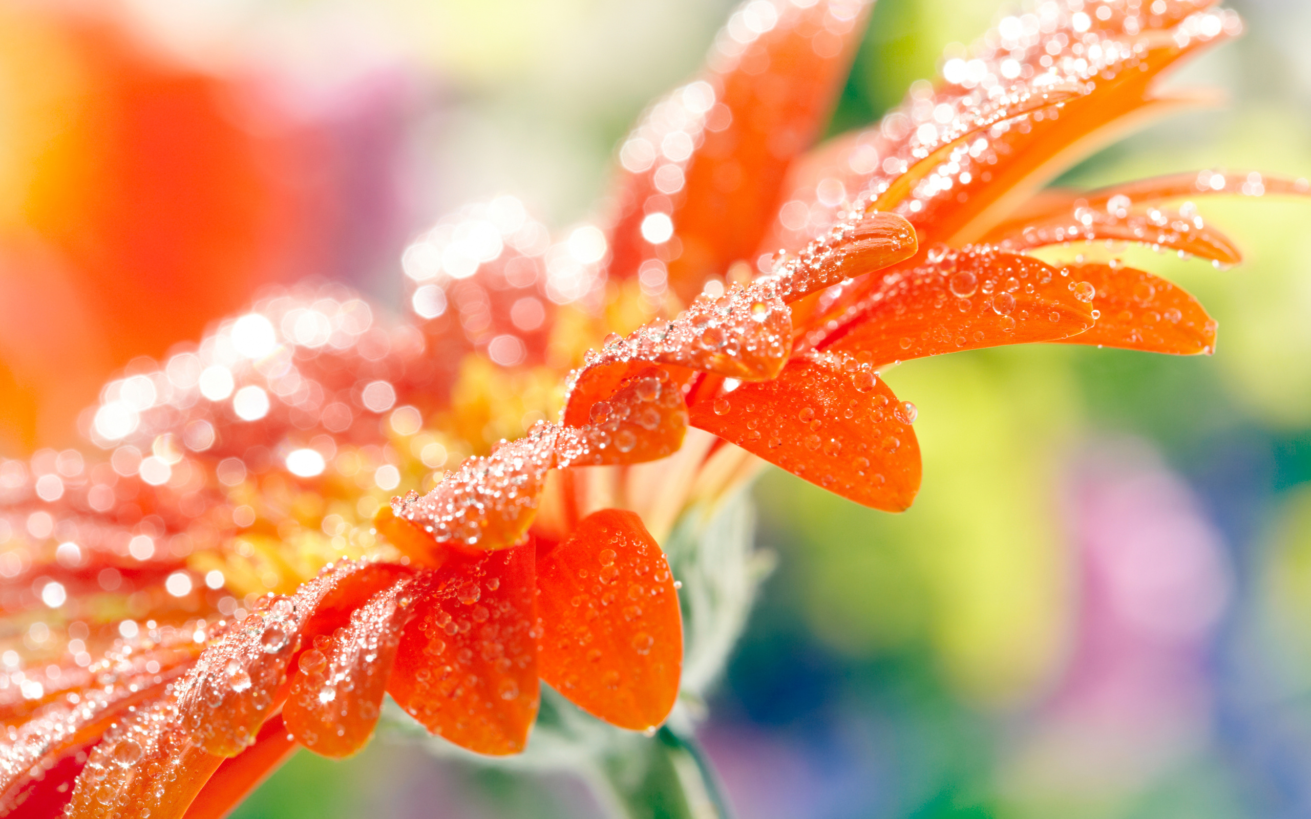 капля макро цветок  № 2540828 загрузить