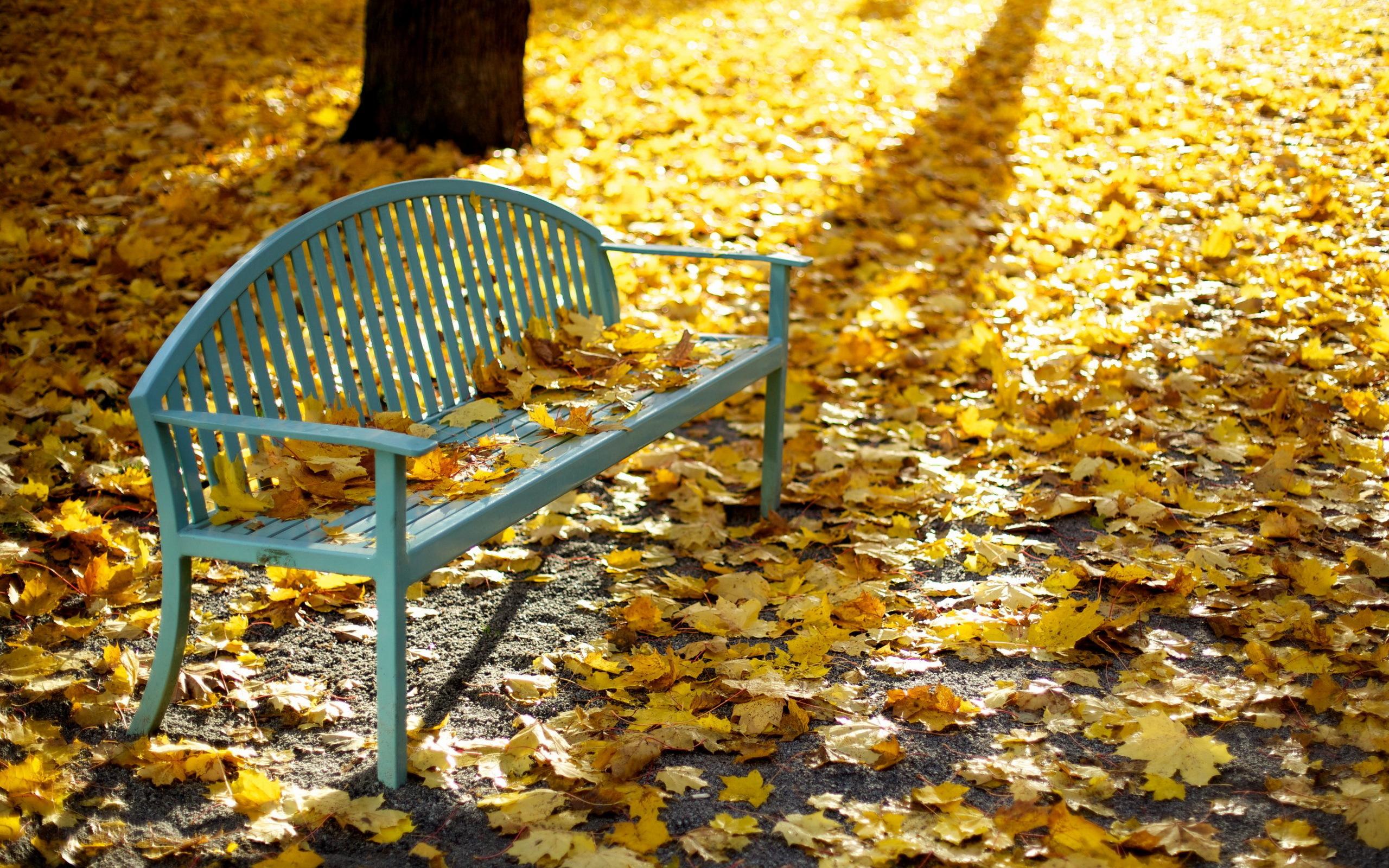Осень листья лавка стол  № 3187452 бесплатно