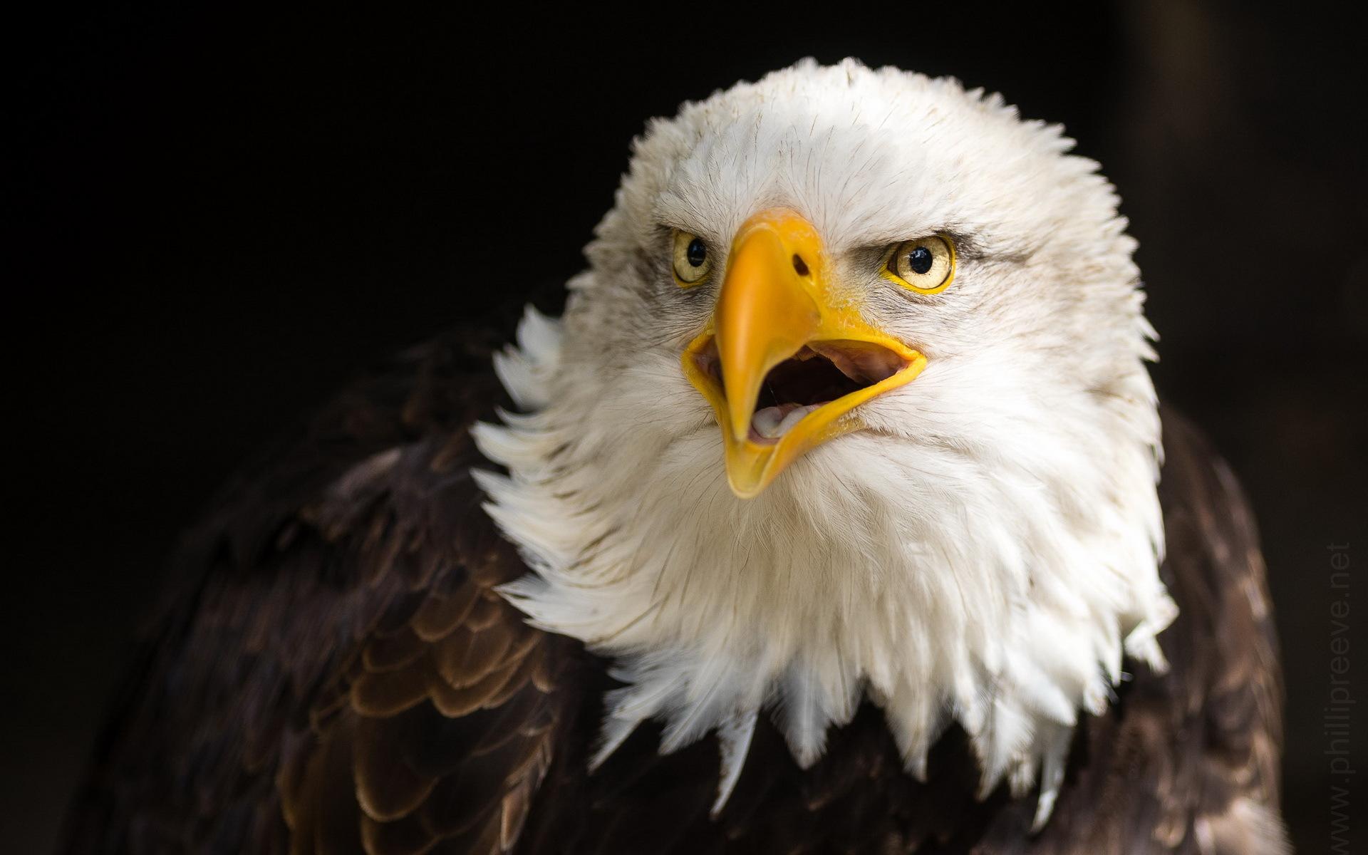 обустройство фото орла на телефон отличие своих сестер