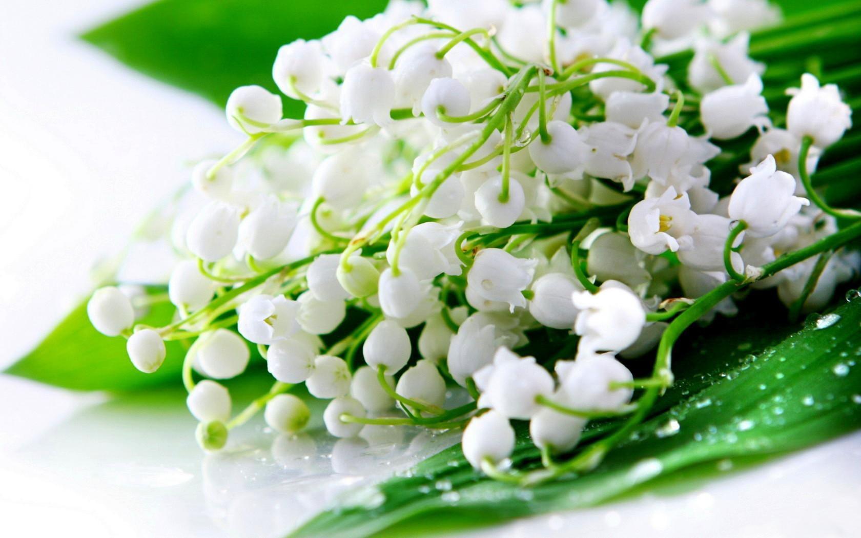 Цветы белые ландыши  № 1608755 загрузить