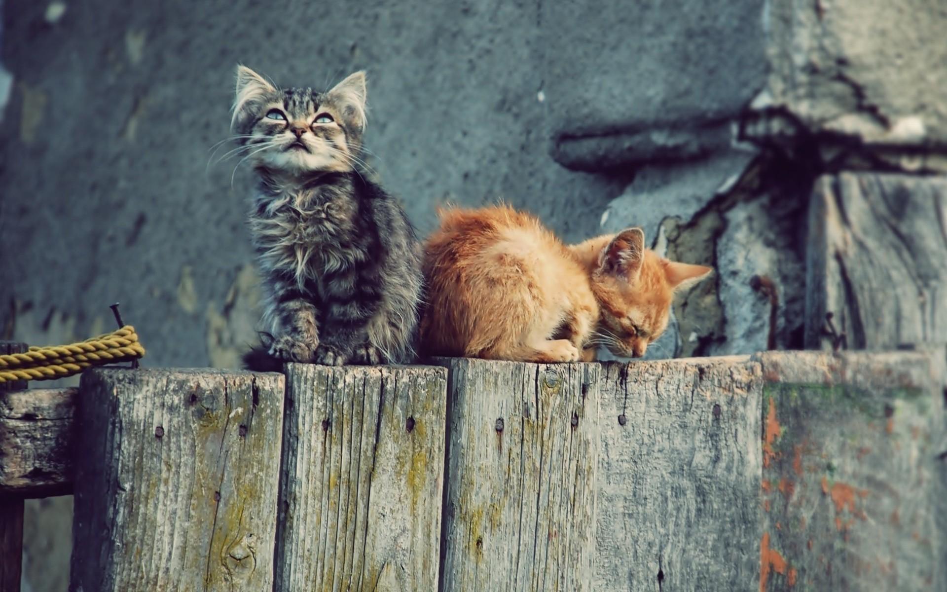 Кот с зеркалом  № 1689834  скачать