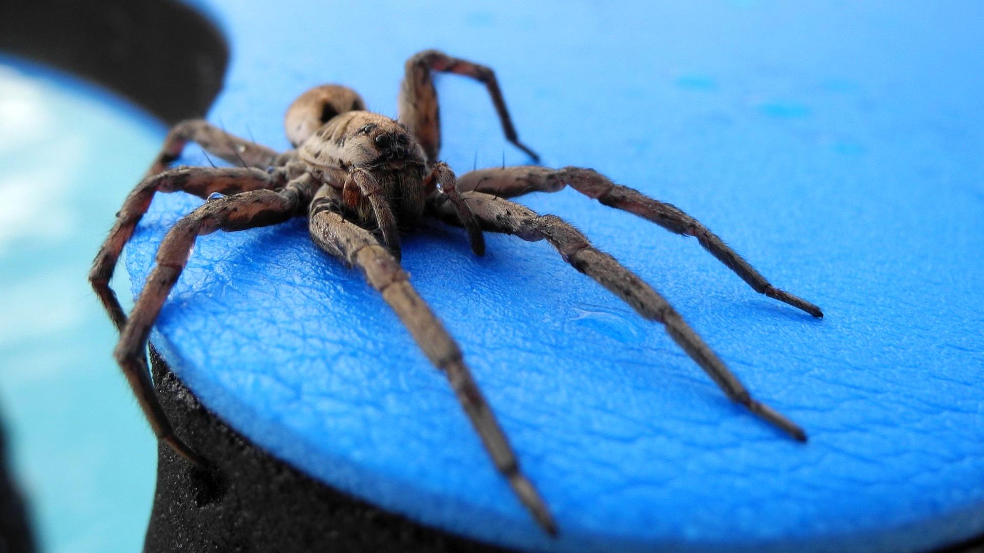природа животные паук  № 2544214 без смс