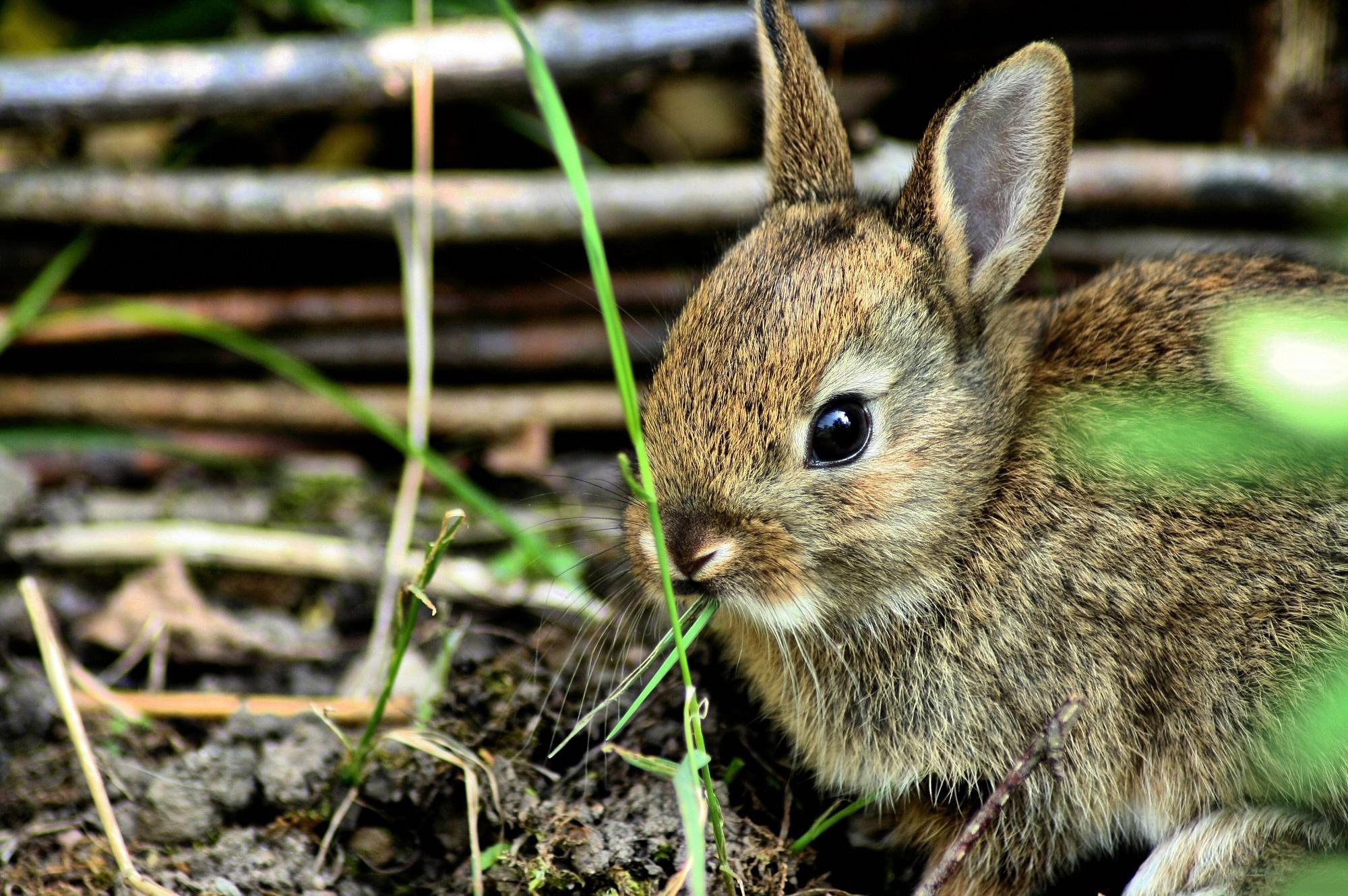 испуганный кролик  № 367670 без смс