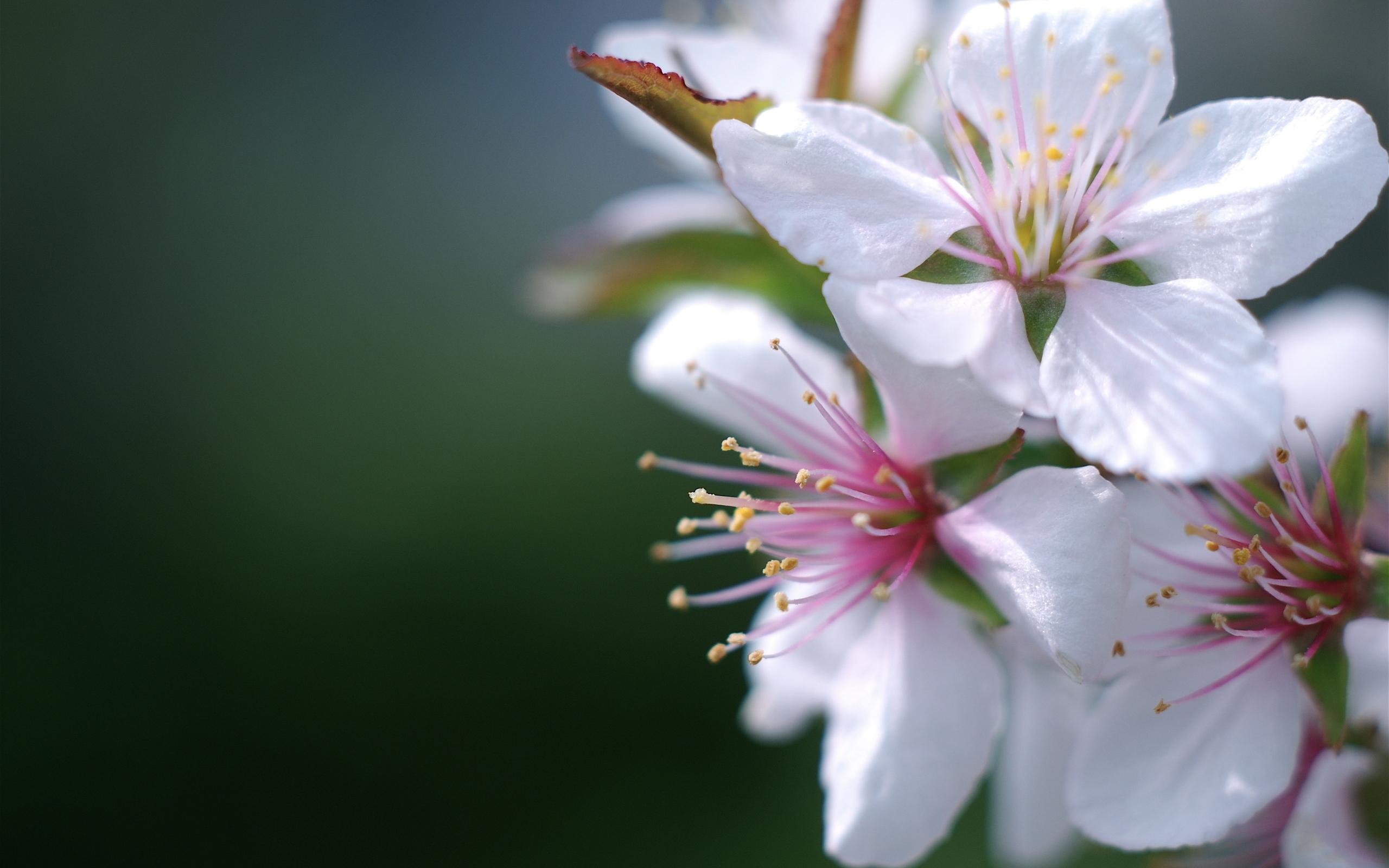Распустившийся цветок загрузить