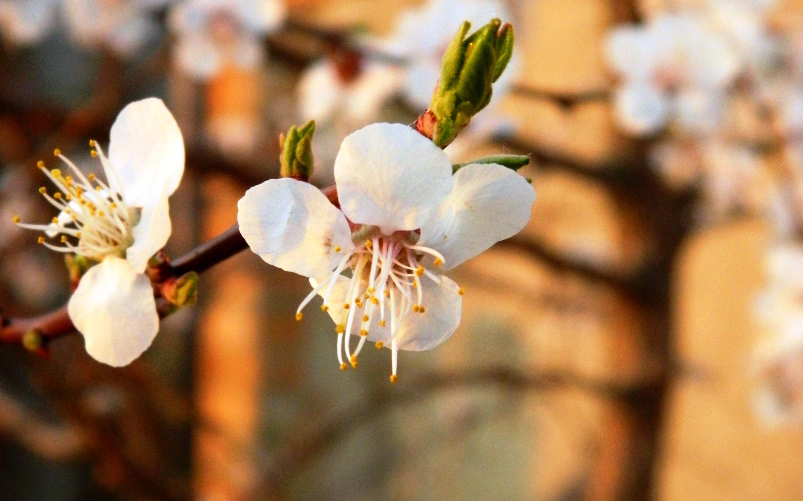 картинки весна апрель на рабочий стол вам
