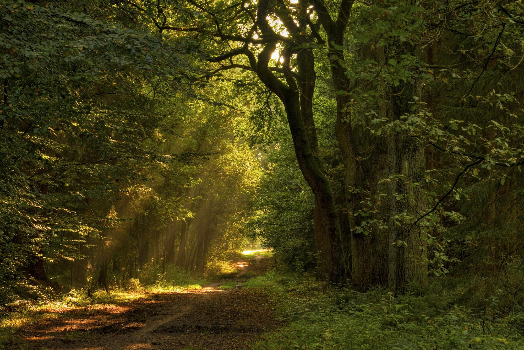 лес лучи солнце дорога загрузить