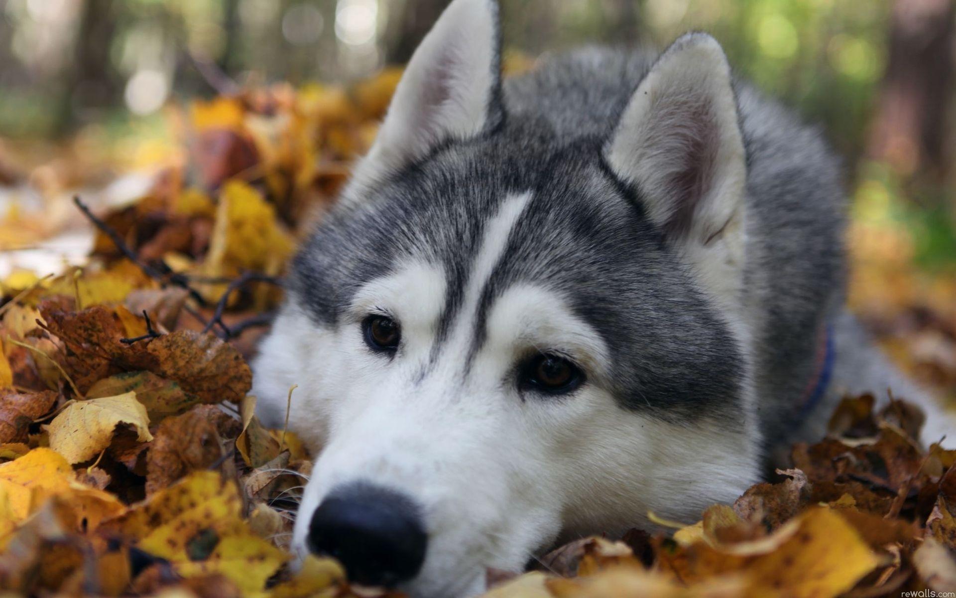 природа животные собака осень листья  № 2019431 без смс