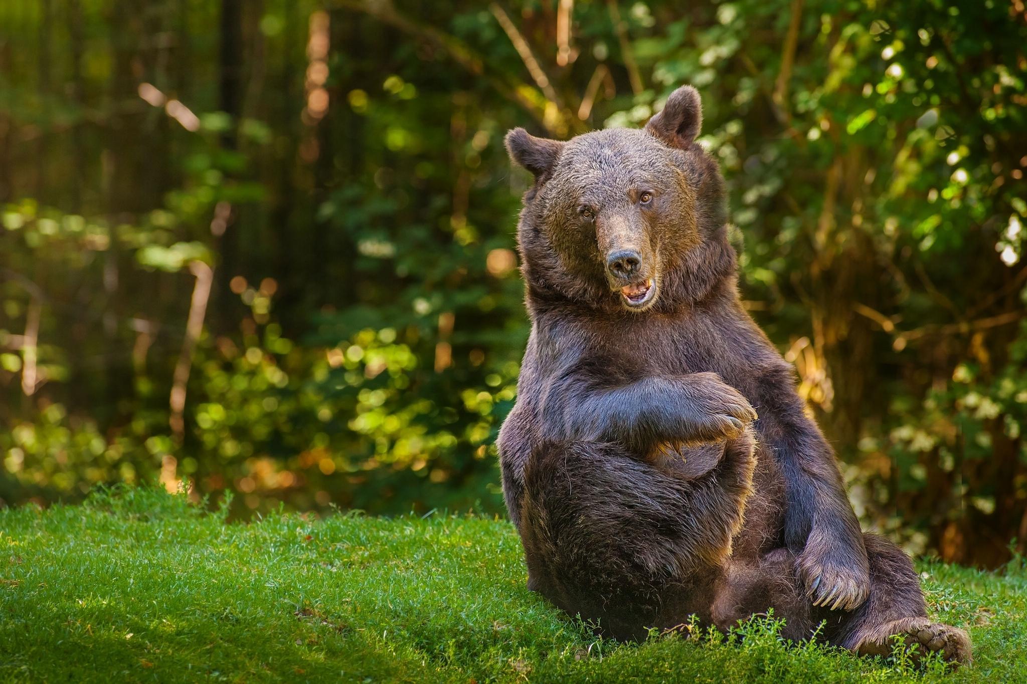 Медвежата без смс