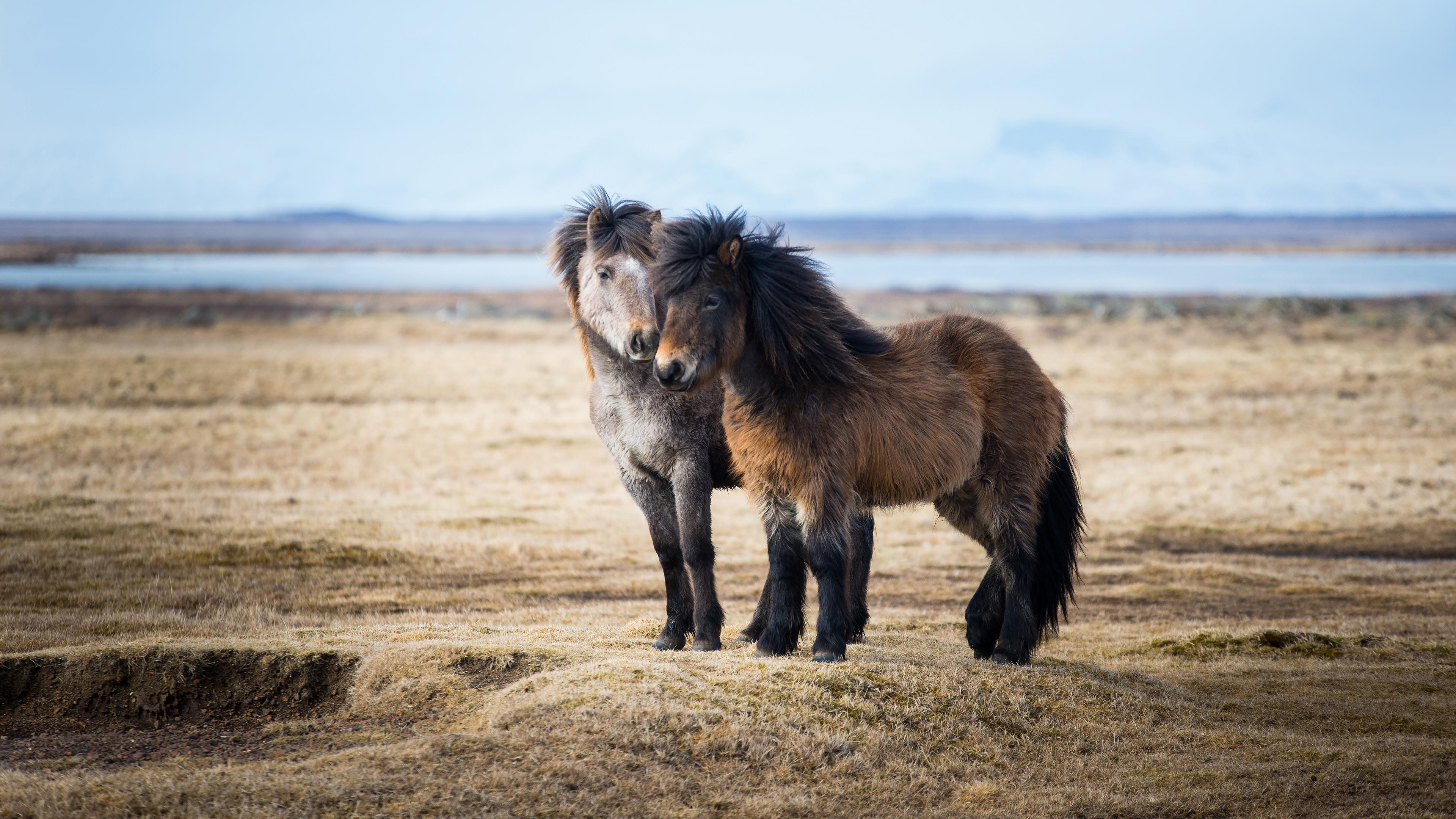 Пони степь без смс