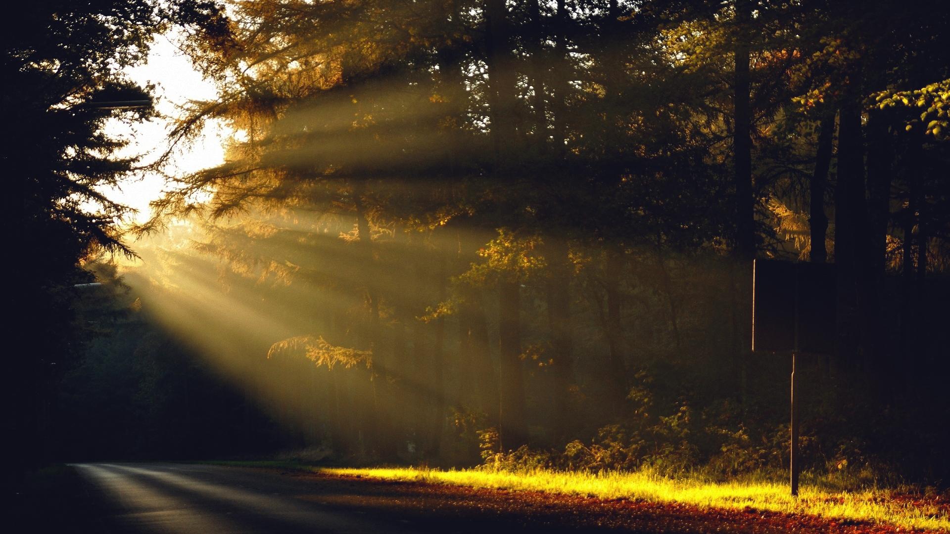 Для, картинки утро природа рассвет