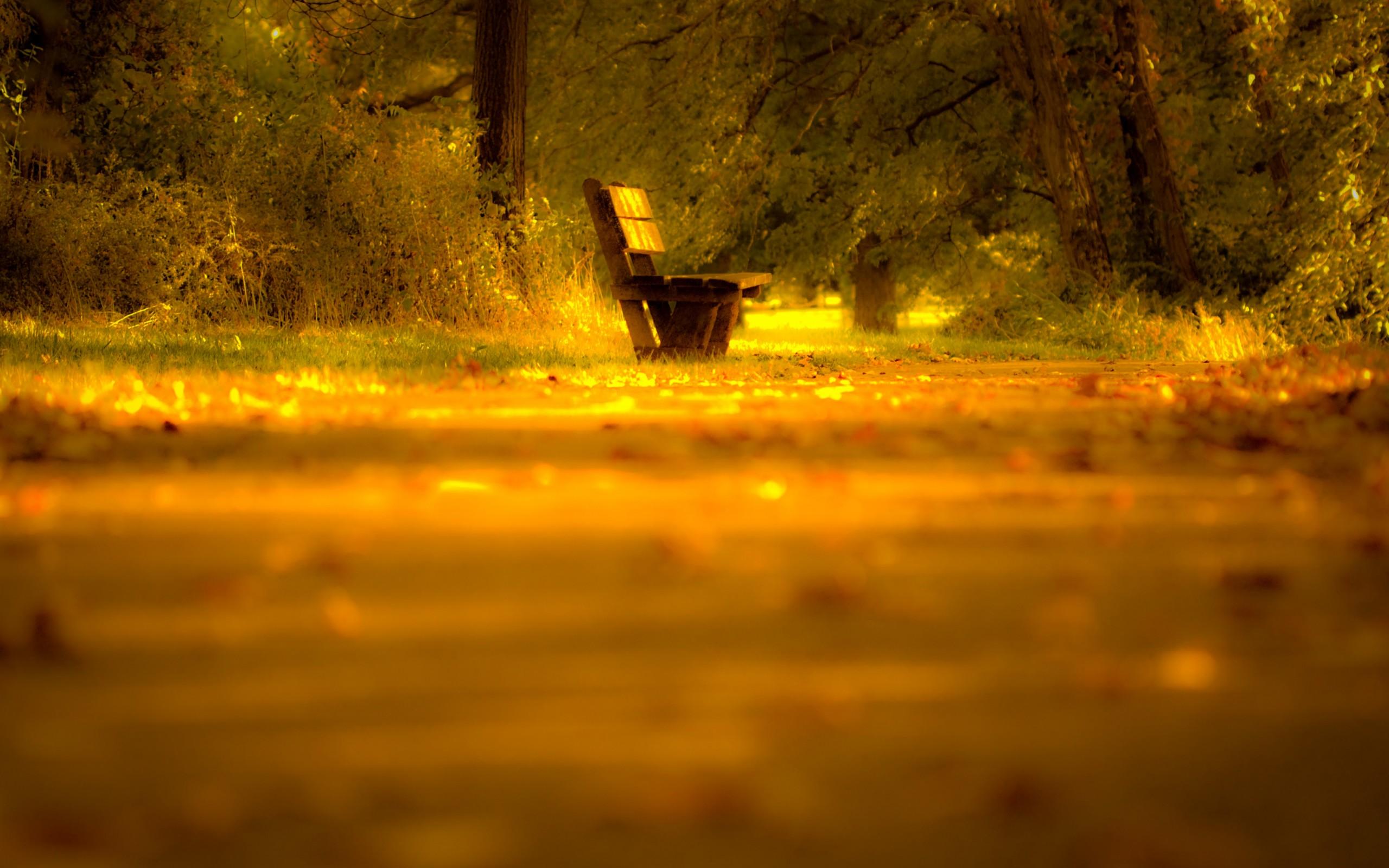 Одинокий вечер на лавочке  № 1821104 без смс