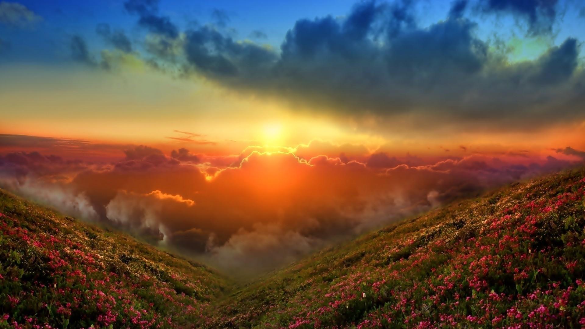 закат лучи солнце цветы горы без смс